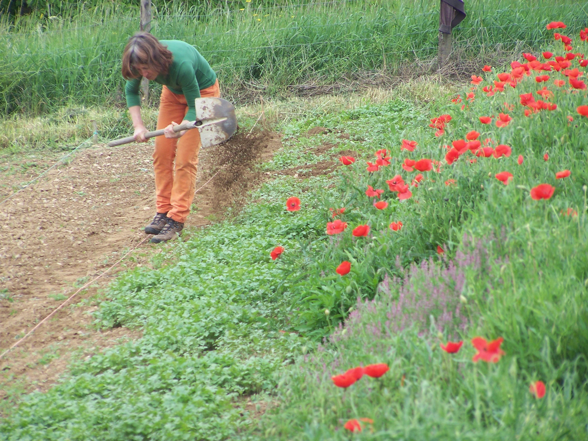 le jardin d'escampette, Fréderique au lit de semence