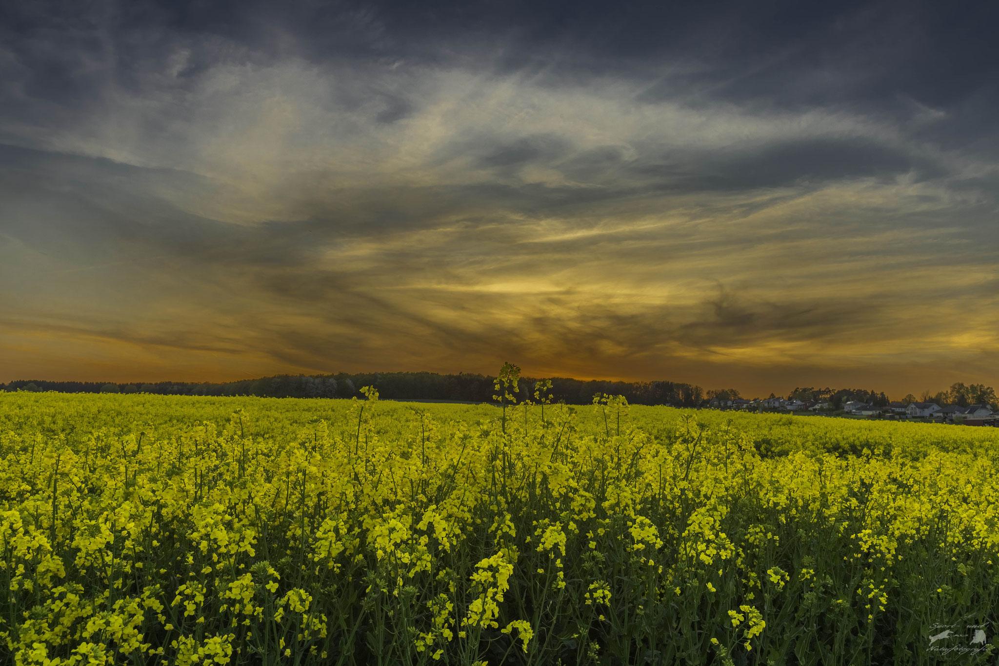 Sonnenuntergang Rehardt