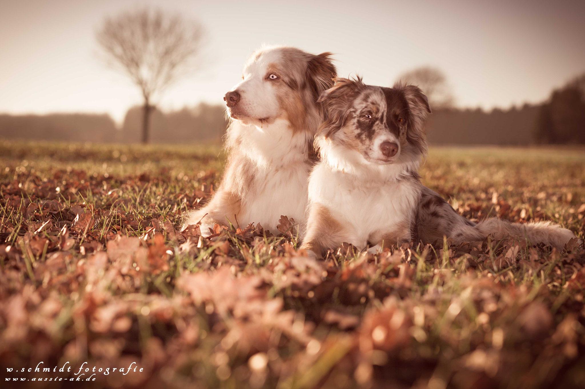 Garffi und Ivy