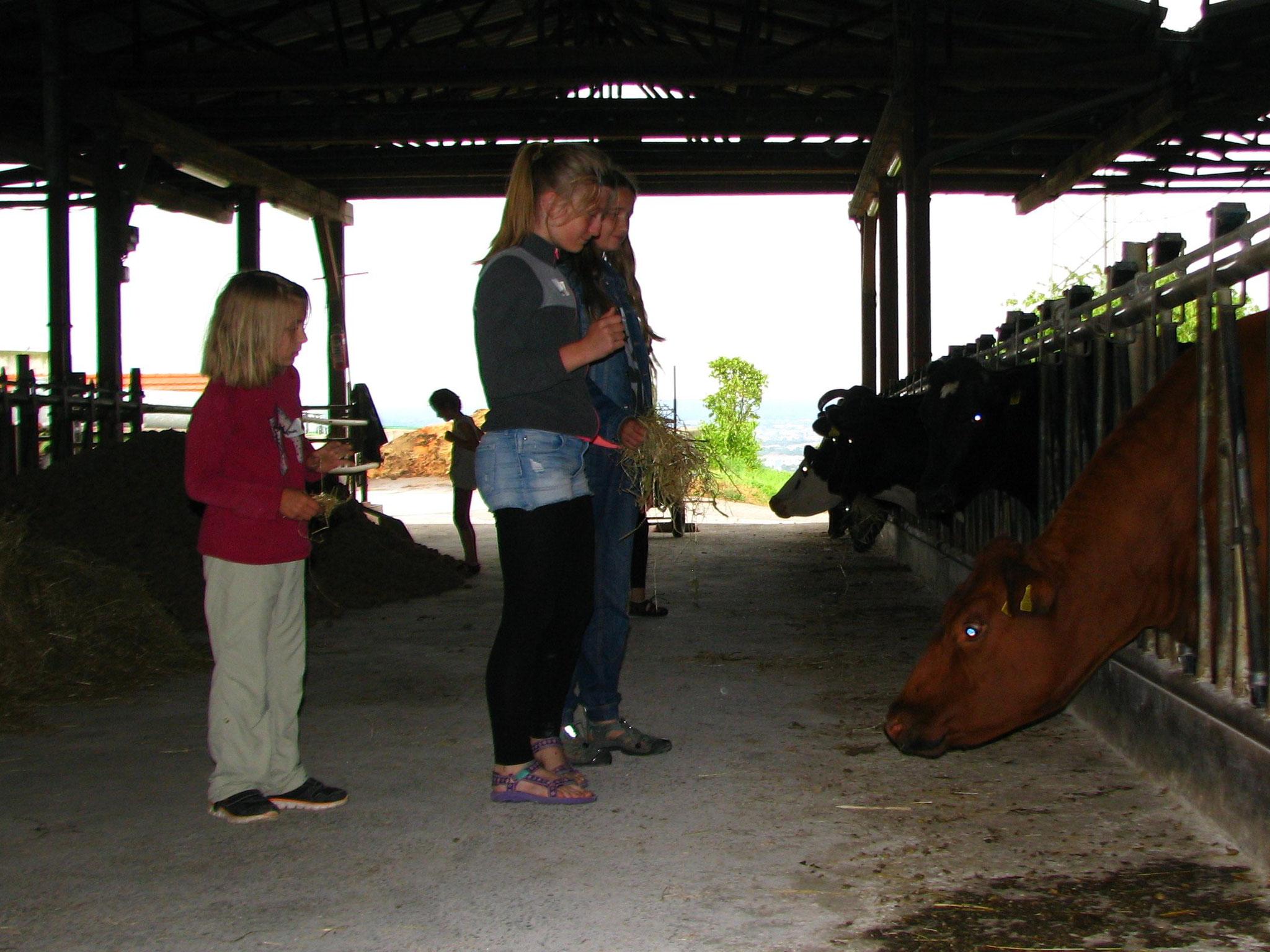 Pause bei den Kühen