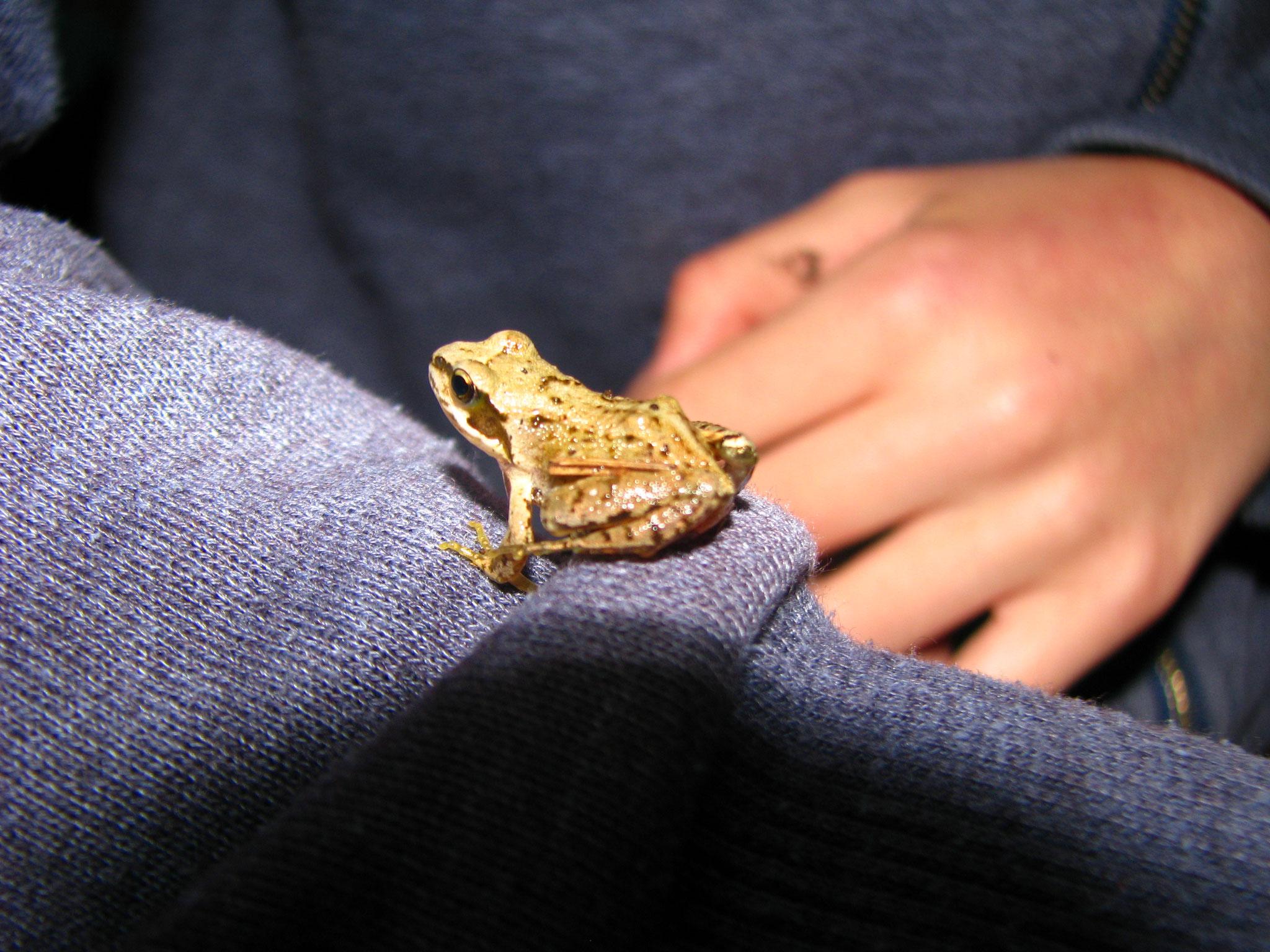 Frosch gefunden