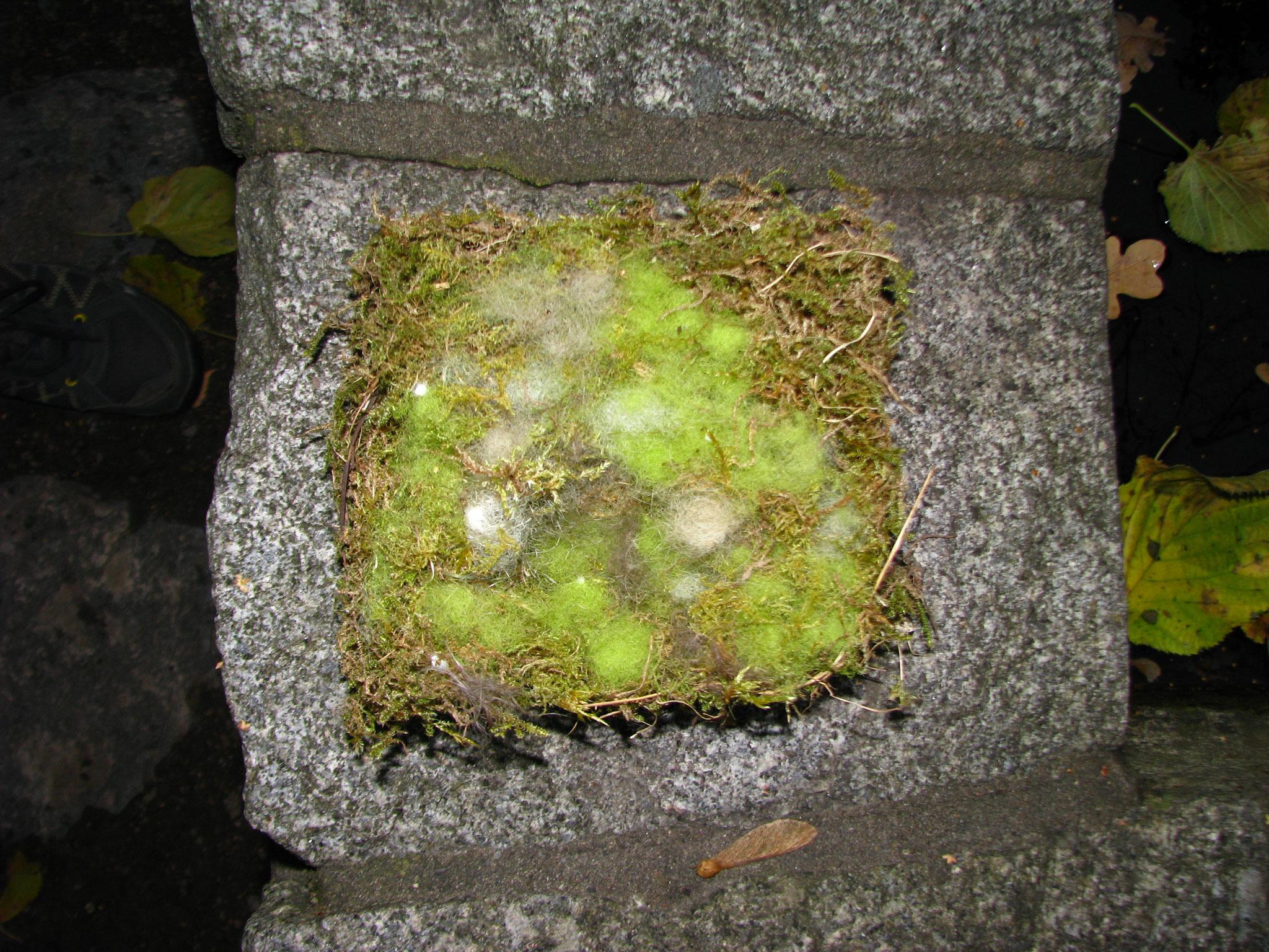 Das Nest mit seltsamen Farben.