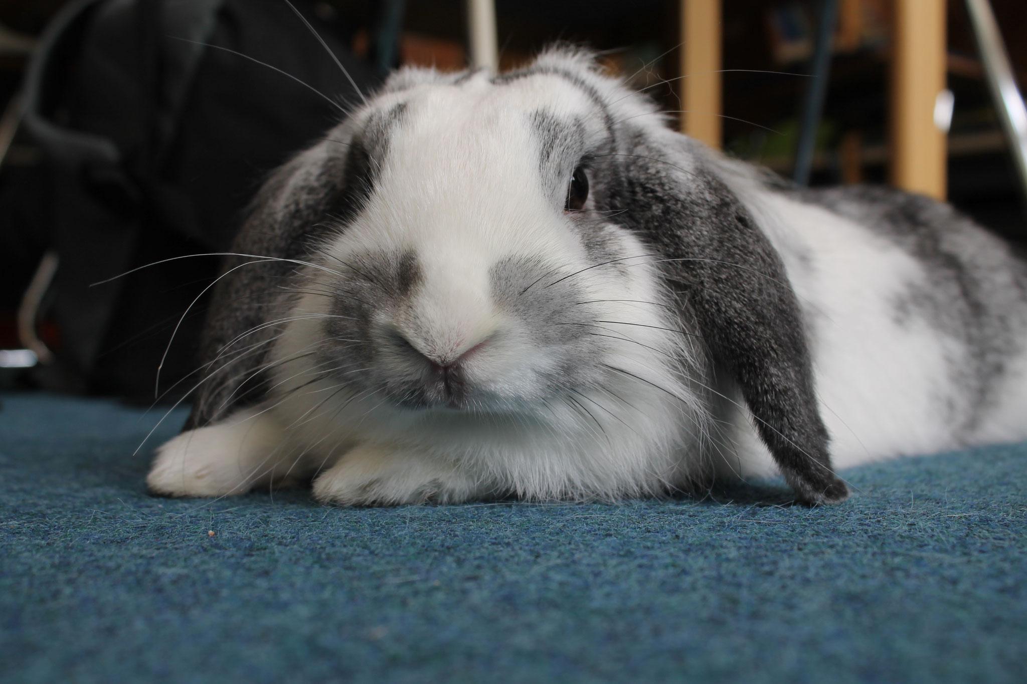 PUSCHA das Kaninchen