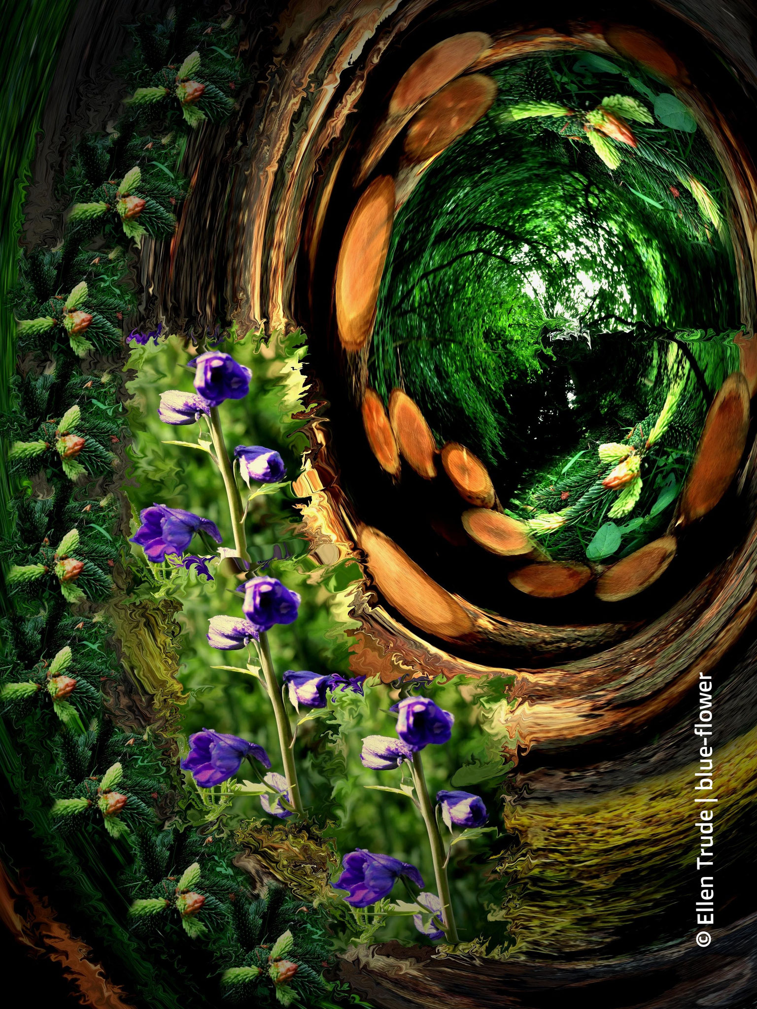 Die Natur erfindet sich neu I - limitierte Auflage 1/3