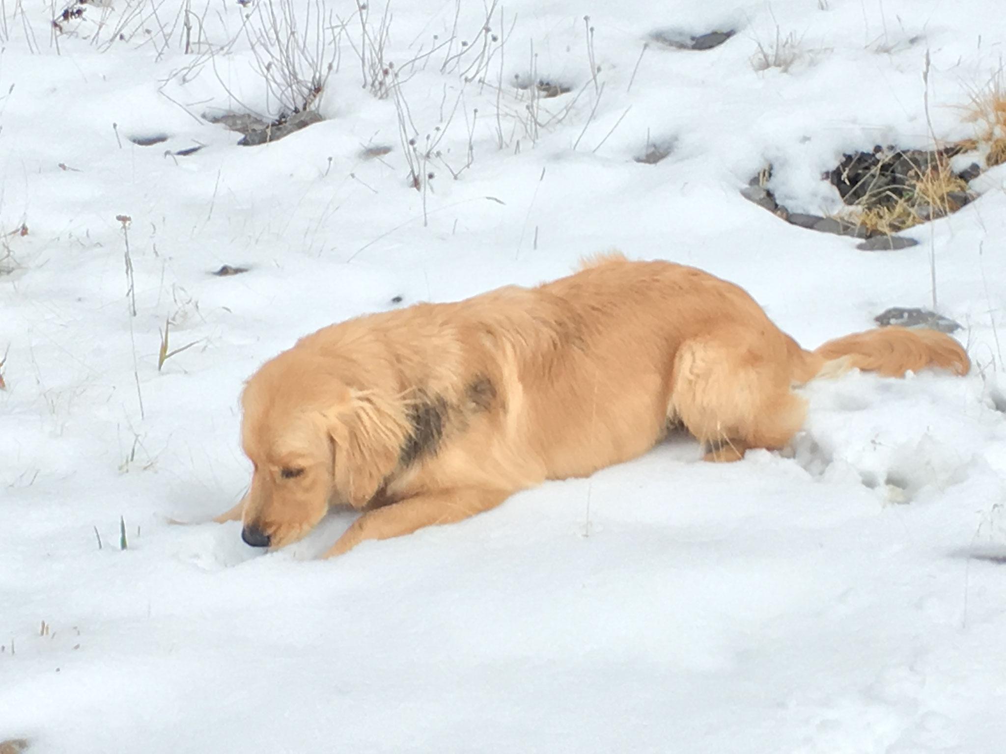 Neptune découvre la neige