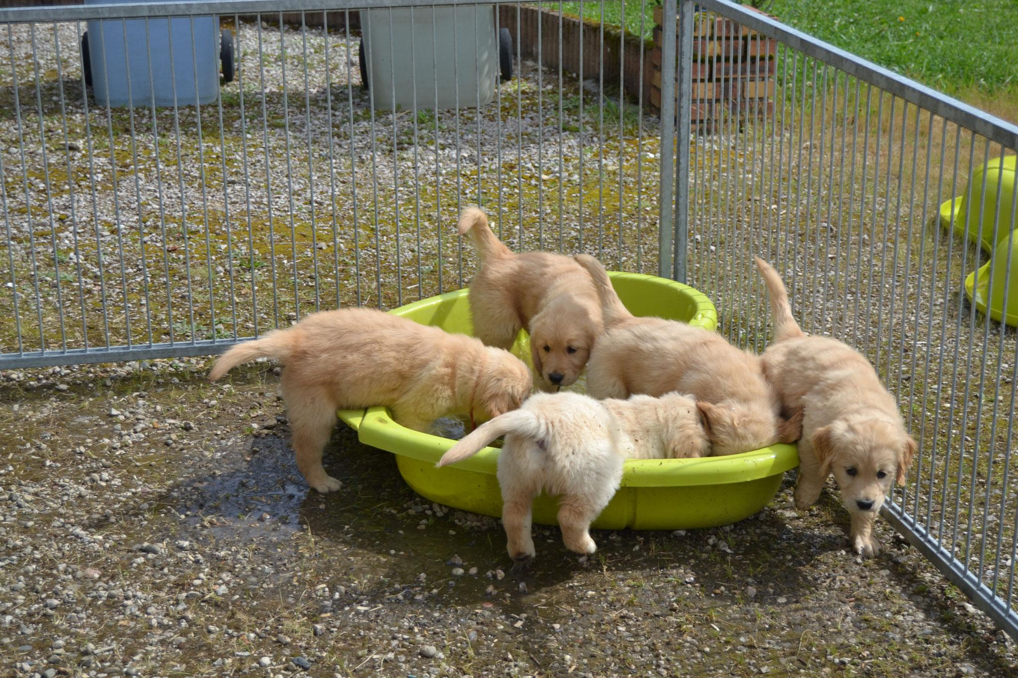 Y'a foule à la piscine ce matin !