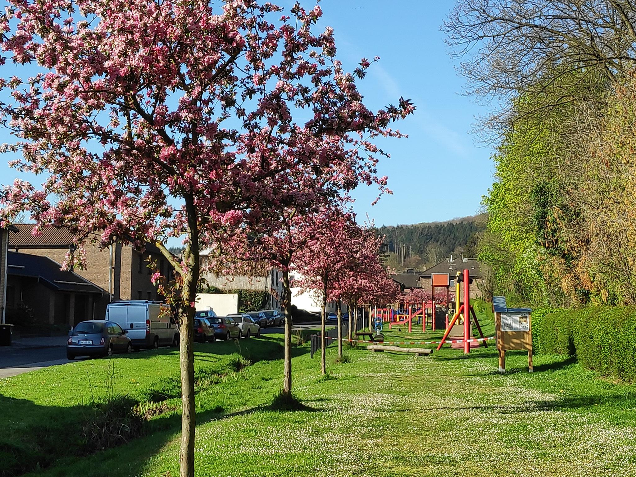Die Kreuzherrenstraße in voller Blütenpracht!