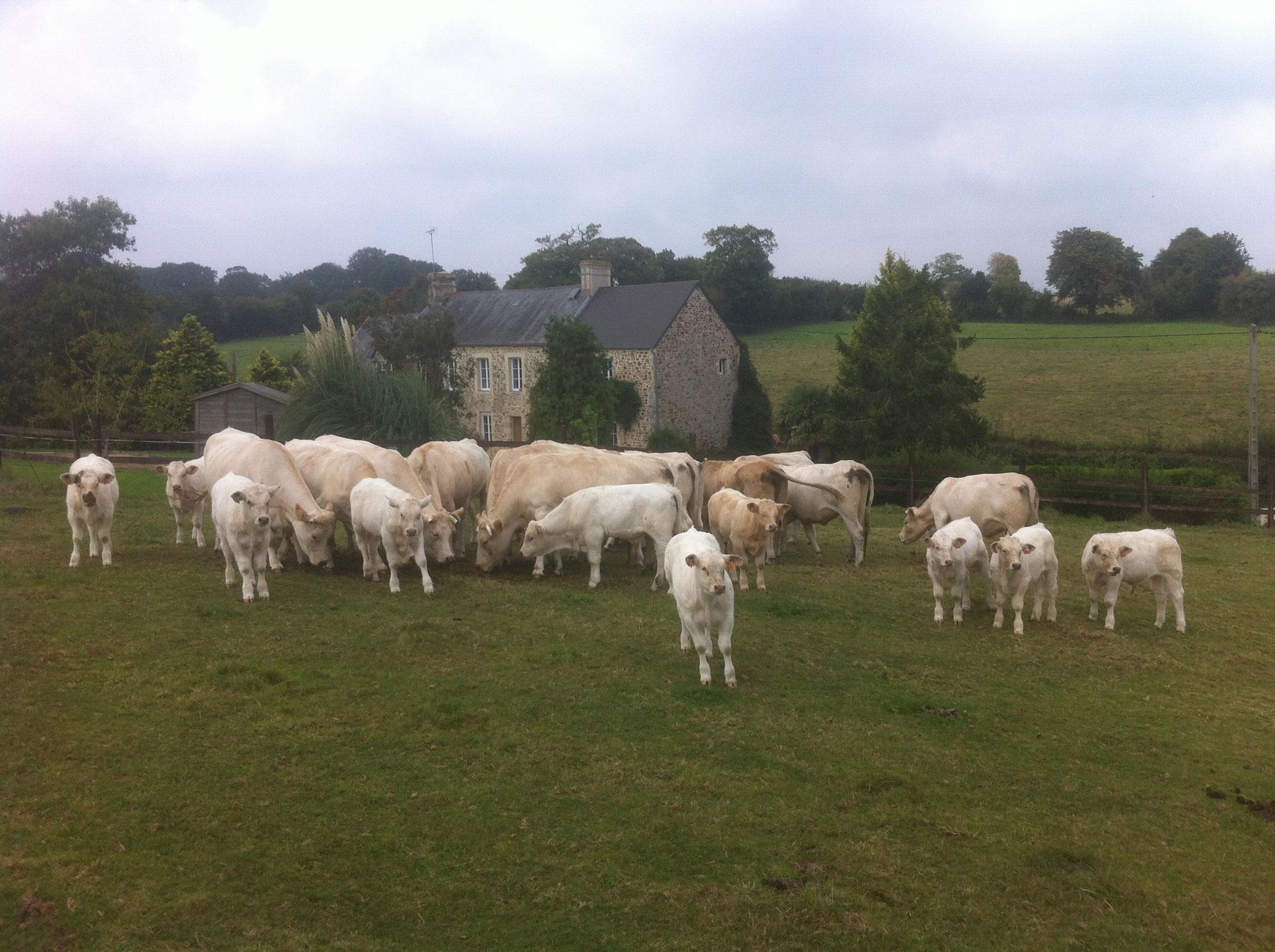Notre troupeau vous souhaite la bienvenue.