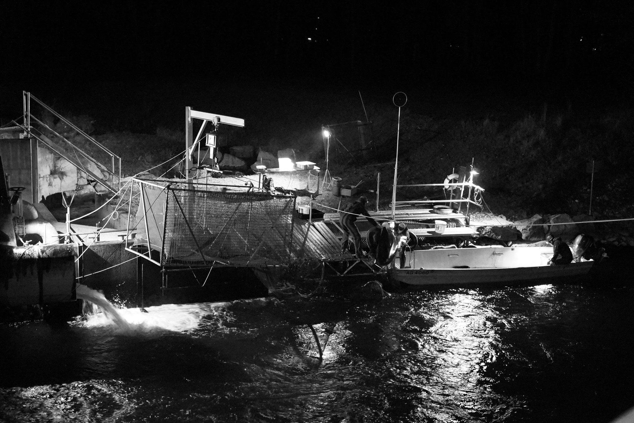 Fischaufstieg- und abstiegsmonitoring, Infrastruktur und Consulting - Fischmonitoring