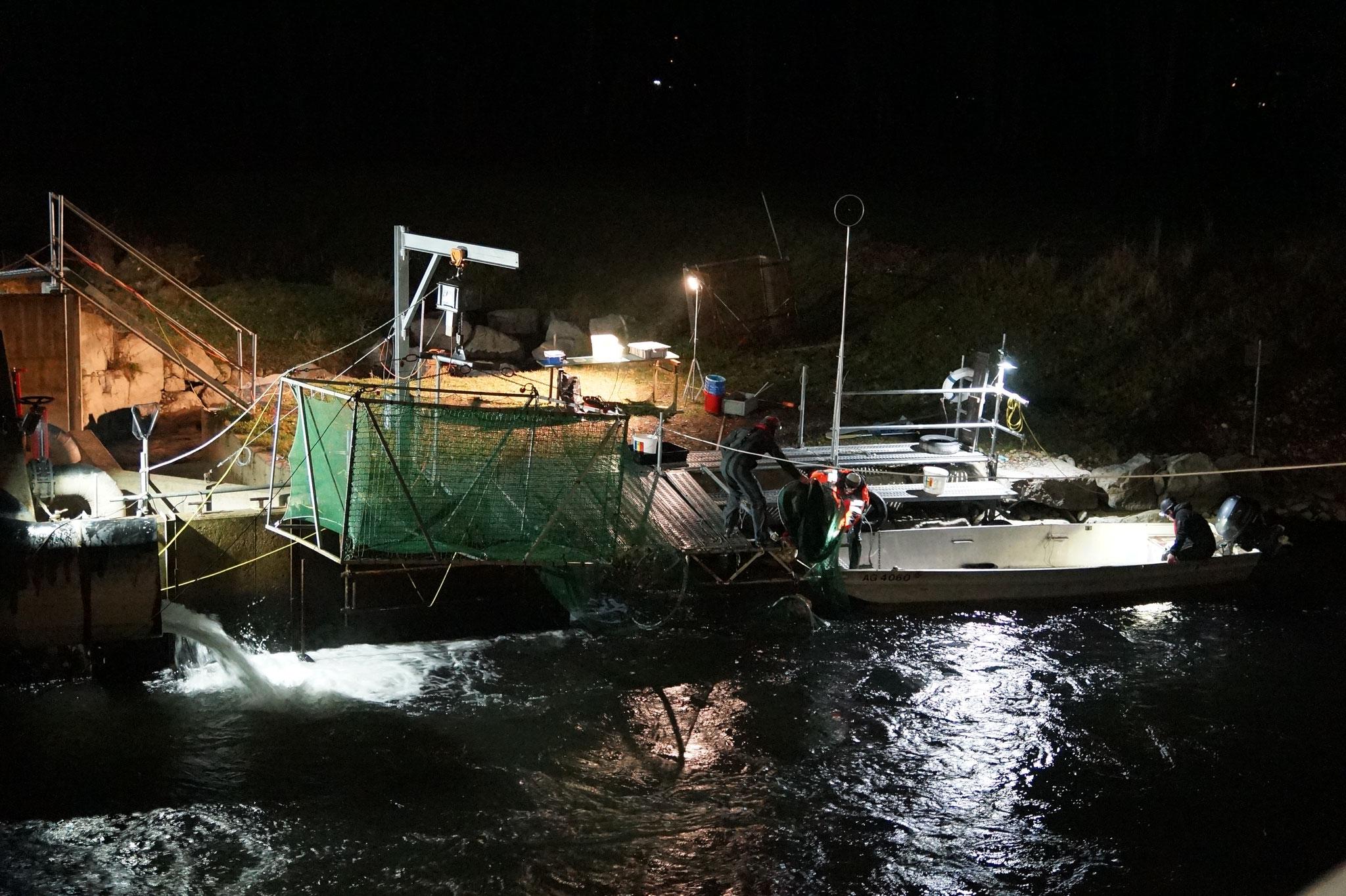 Fischabstiegsmonitoring mit unserer Infrastruktur