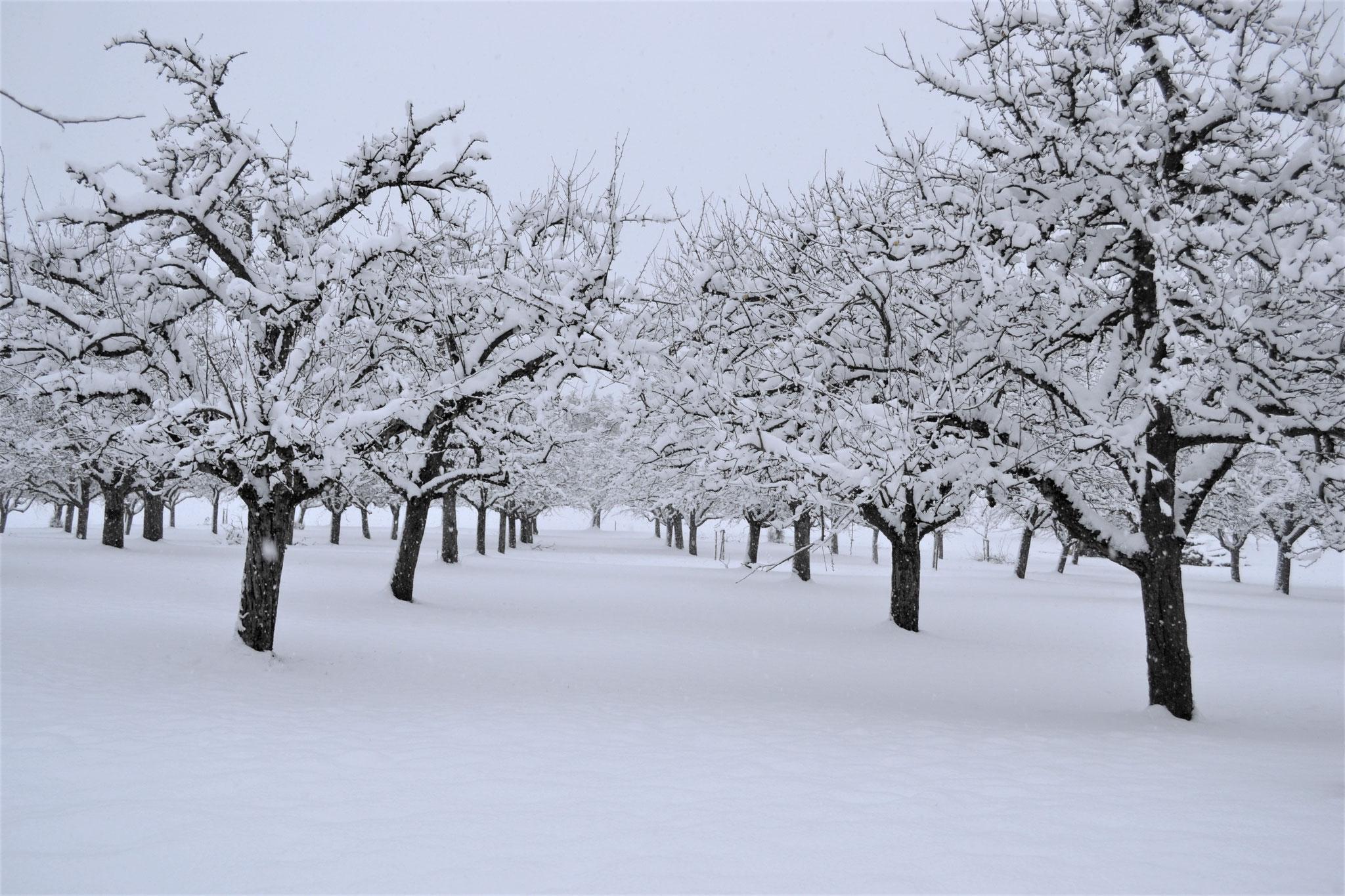 Unser Obstgarten im Winterschlaf.