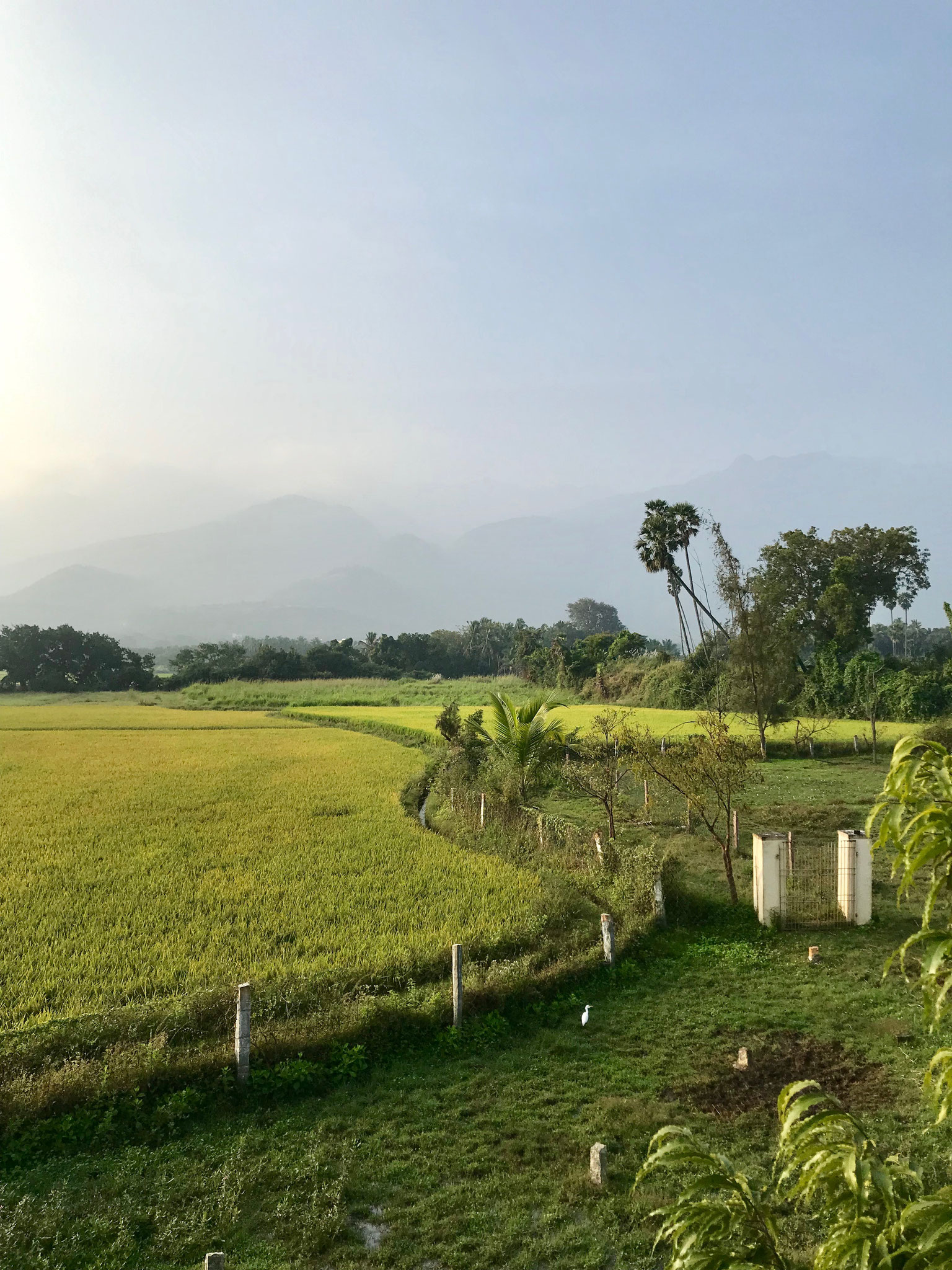 A view of the landscape behind the ashram on the early morning of Thai Pongal from top of the cowshed