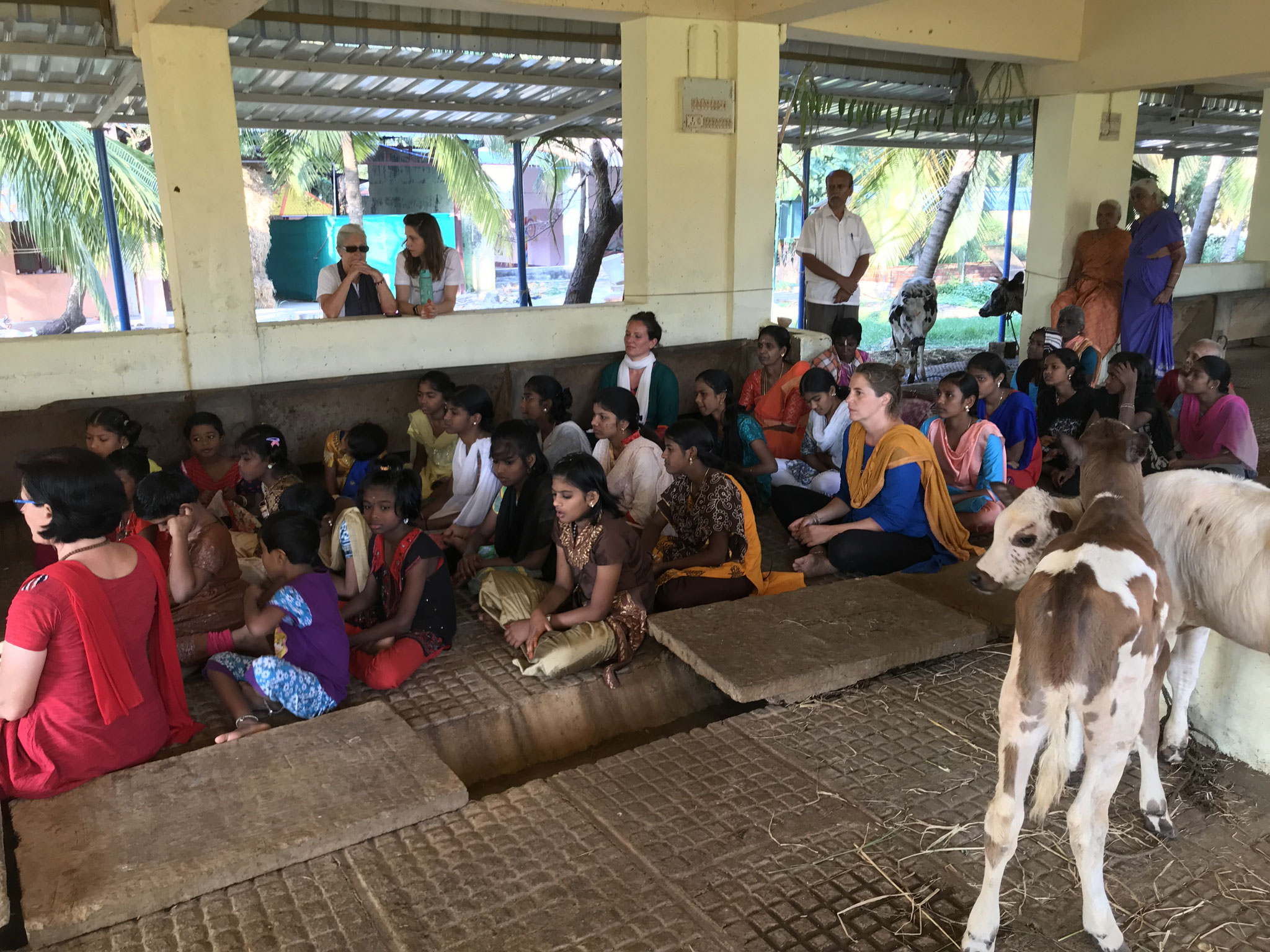 Bhajans in the cowshed (on that one day, we are singing Bhajans in the cowshed while all the cows are tied outside in the garden)