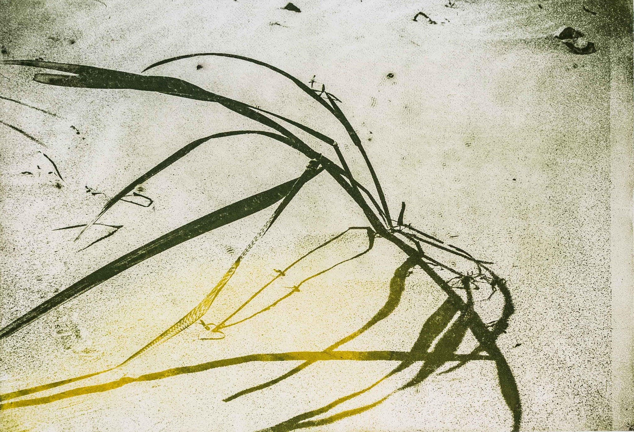 Intagliotypie, 20x30 cm, Strandhafer