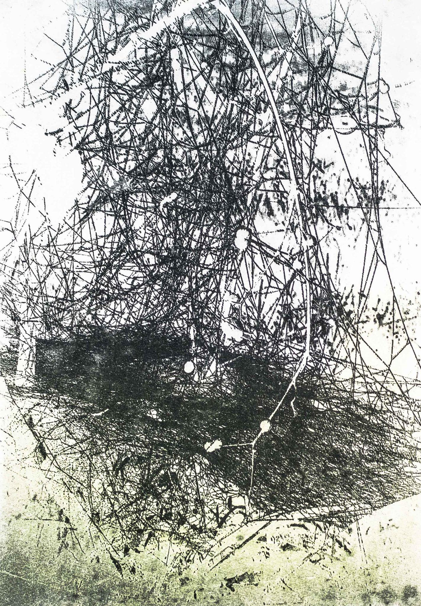 Intagliotypie 30x20 cm, Spinnenkunst