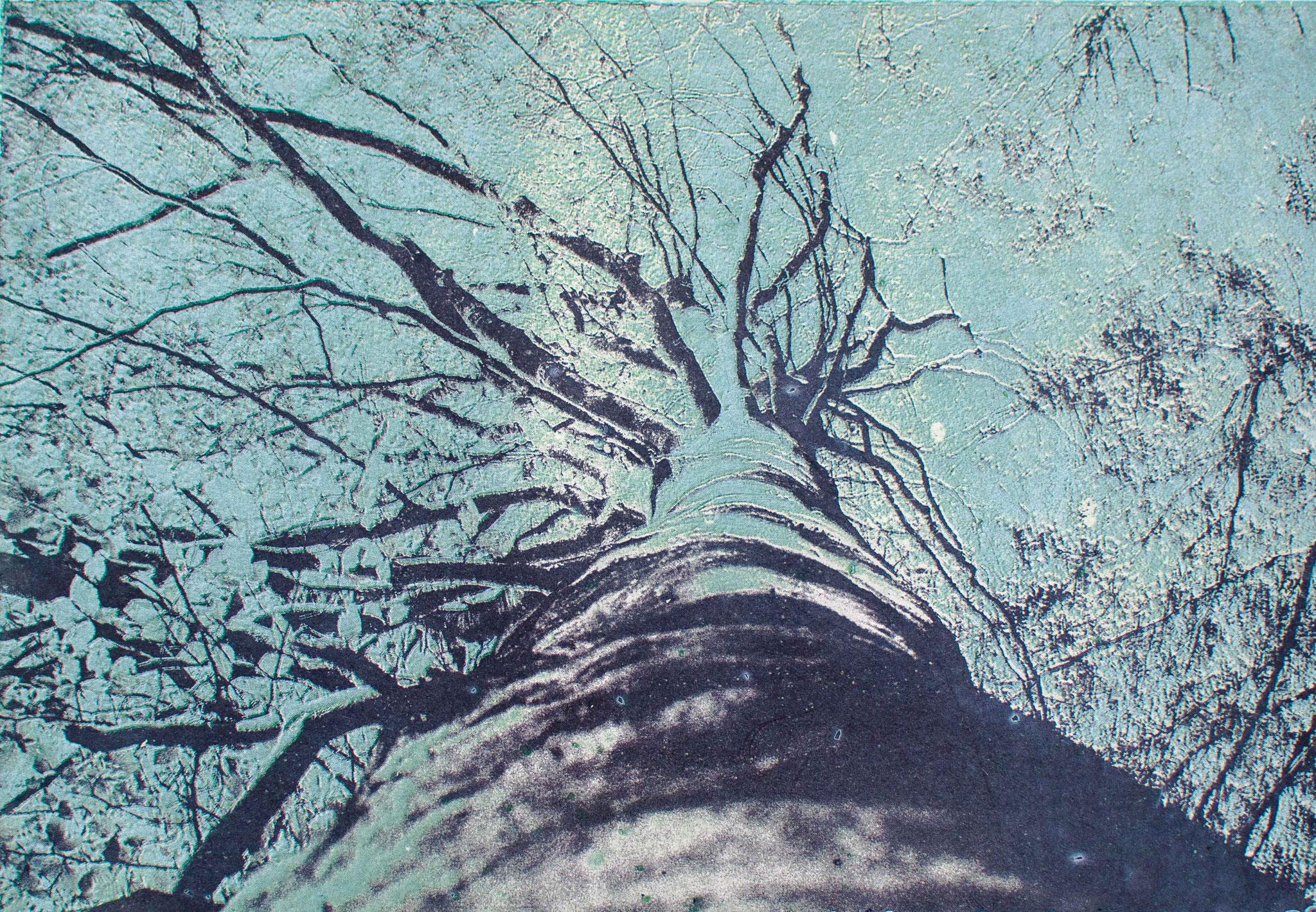 Intagliotypie, 20x30 cm, Buchenkrone