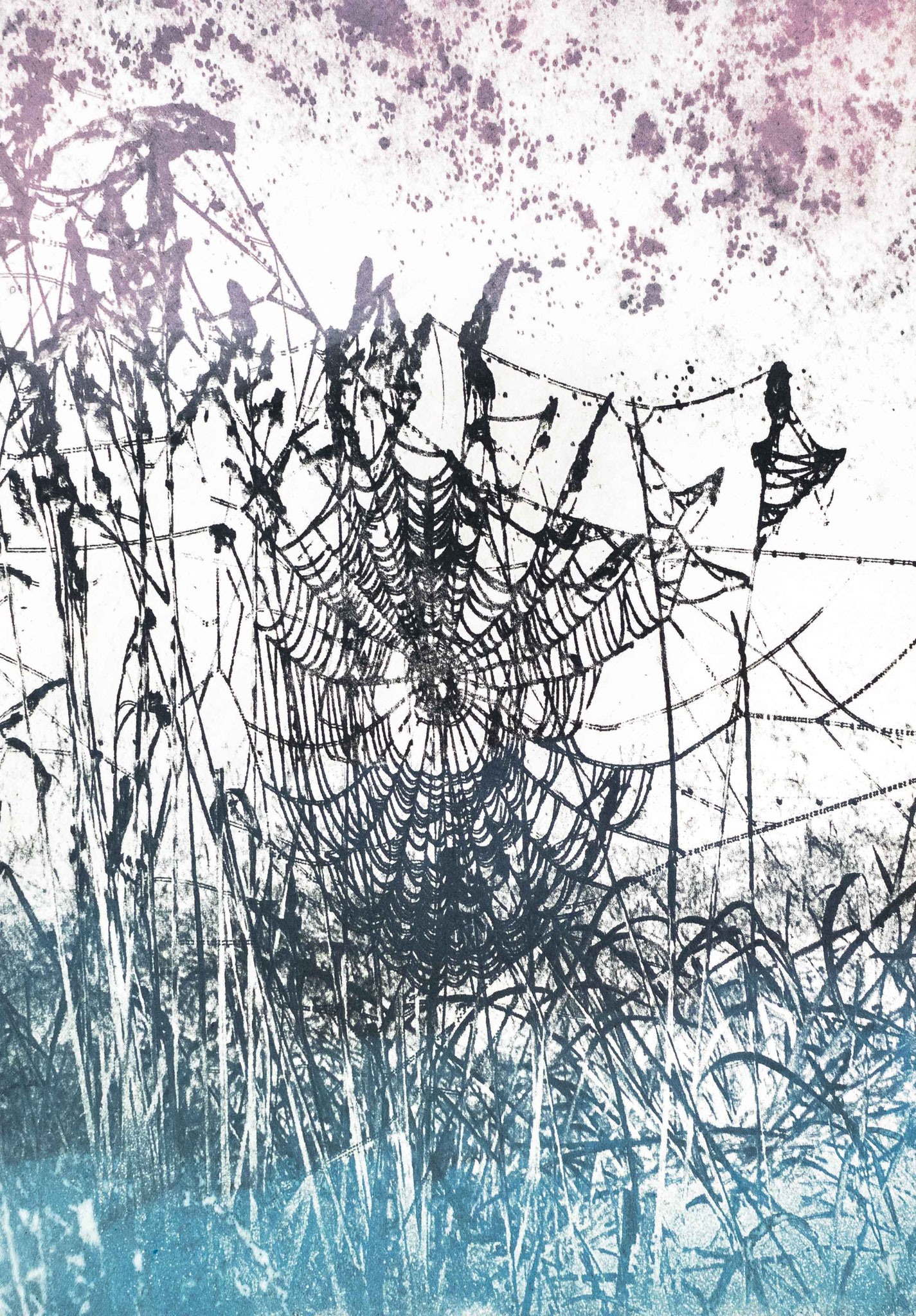 Intagliotypie, 30x20 cm, Spinnenkunst