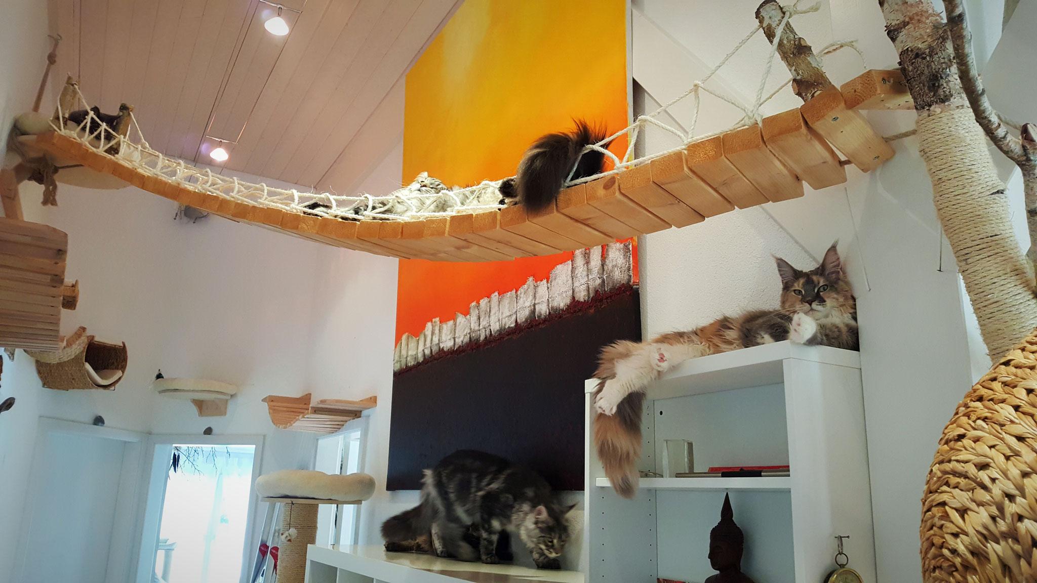 Der selbst gebaute Katzenpark