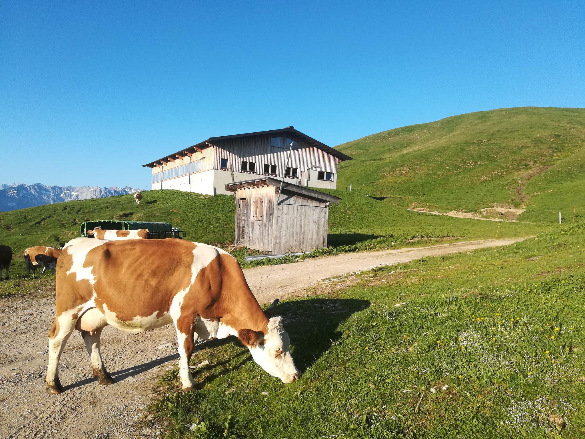 Unser Alm-Stall am Wandberg