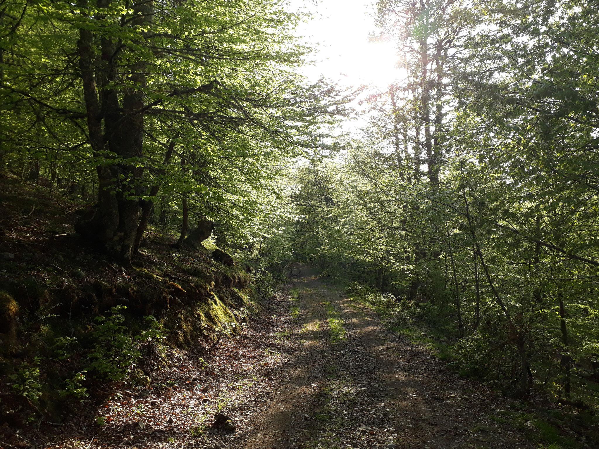 Camino en ruta Caloca