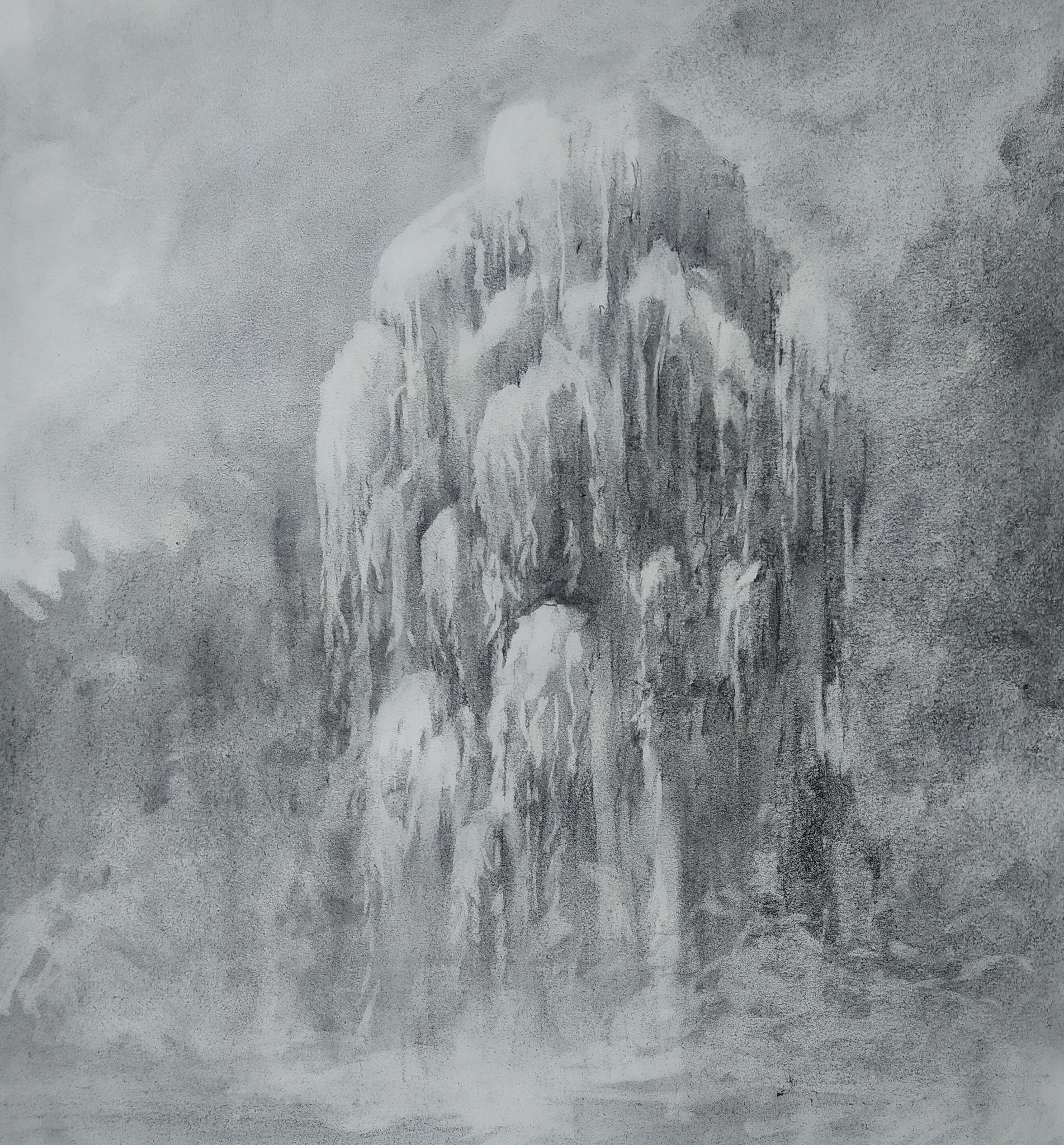 2020 - Willow (42 x 60 cm; charcoal on paper; fixative) AVAILABLE