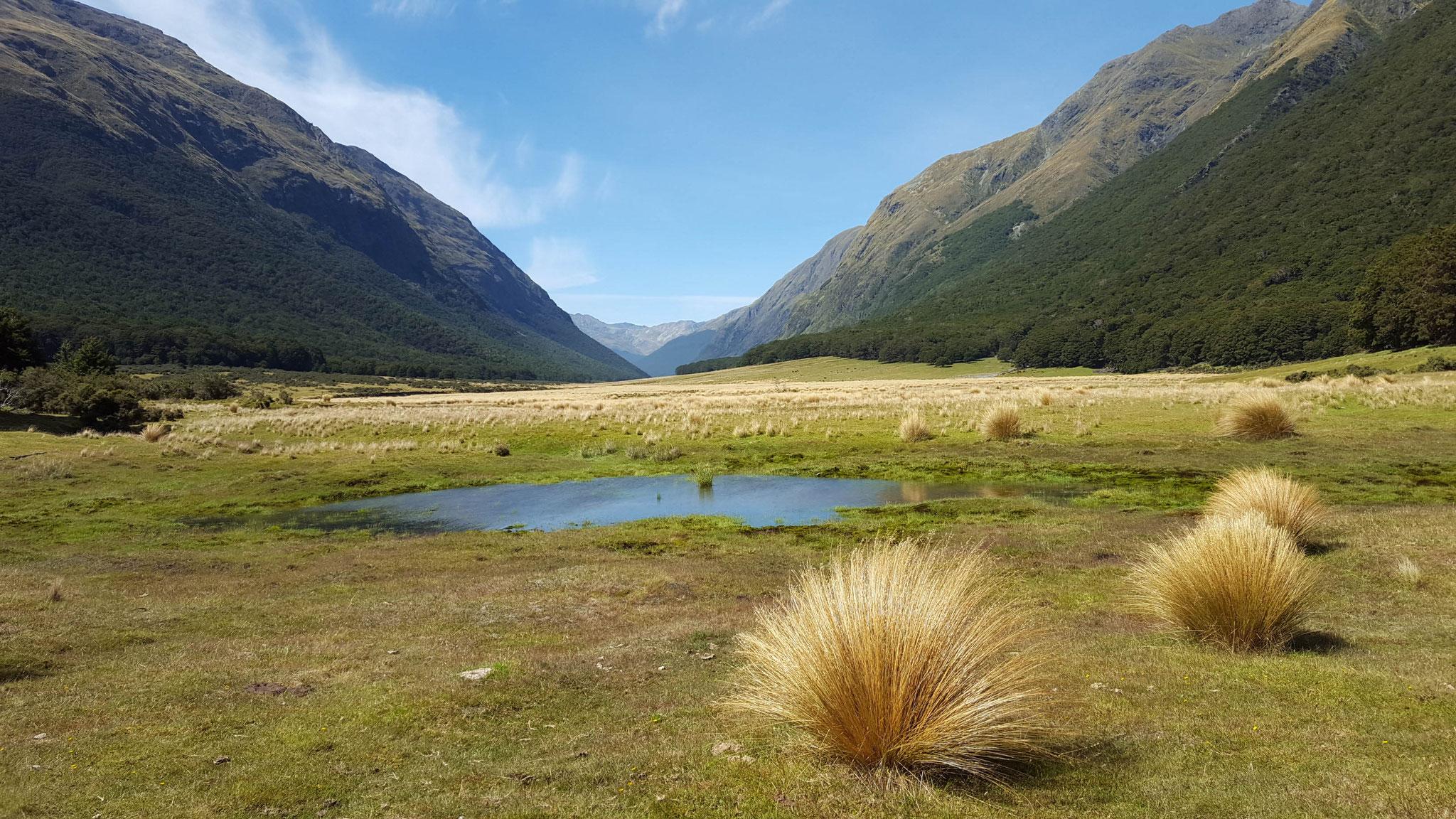 Greenstone Valley zur Mc Kellar Hut