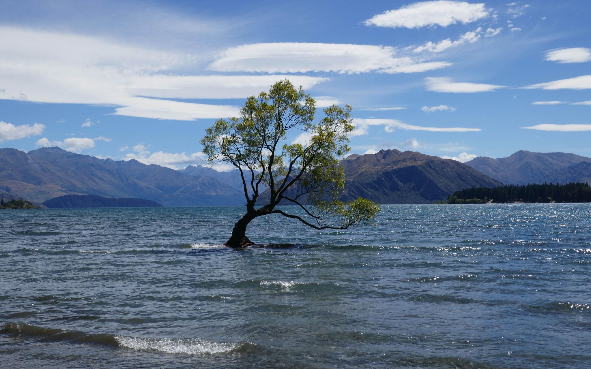 Fototbaum im Lake Wanaka