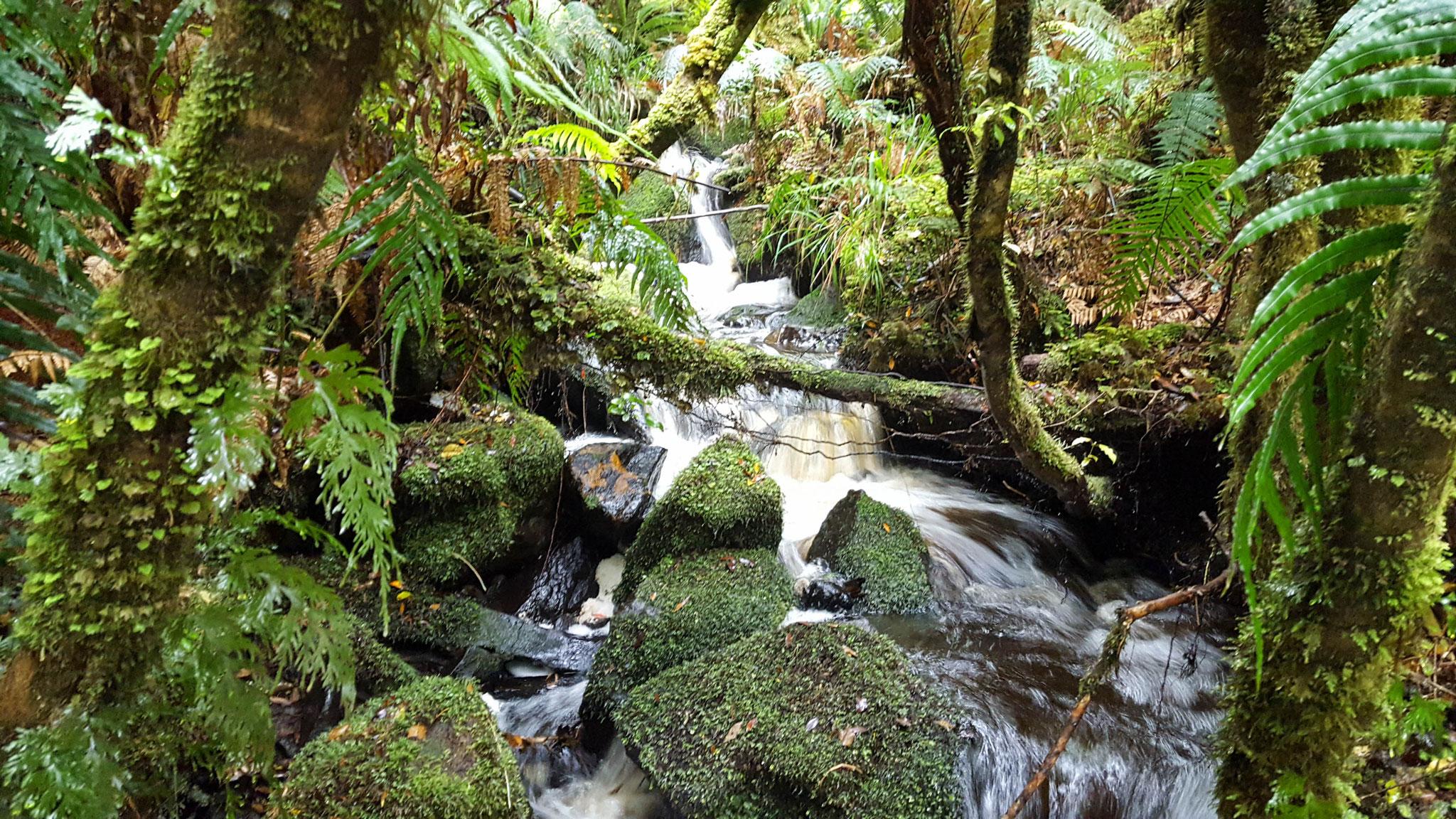 Wasser, Felsen, Bäume und Moose