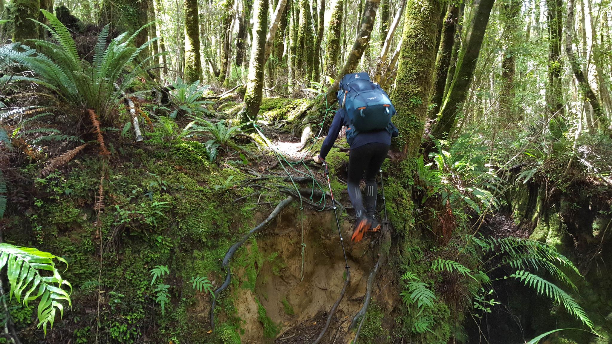 der Weg ist immer wieder unterspült am Te Araroa