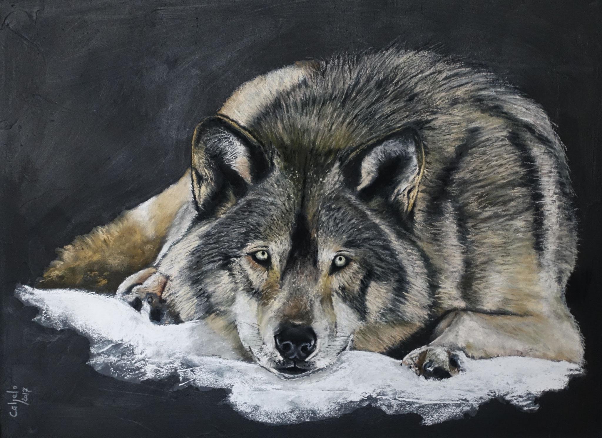 60x80 - Loup gris