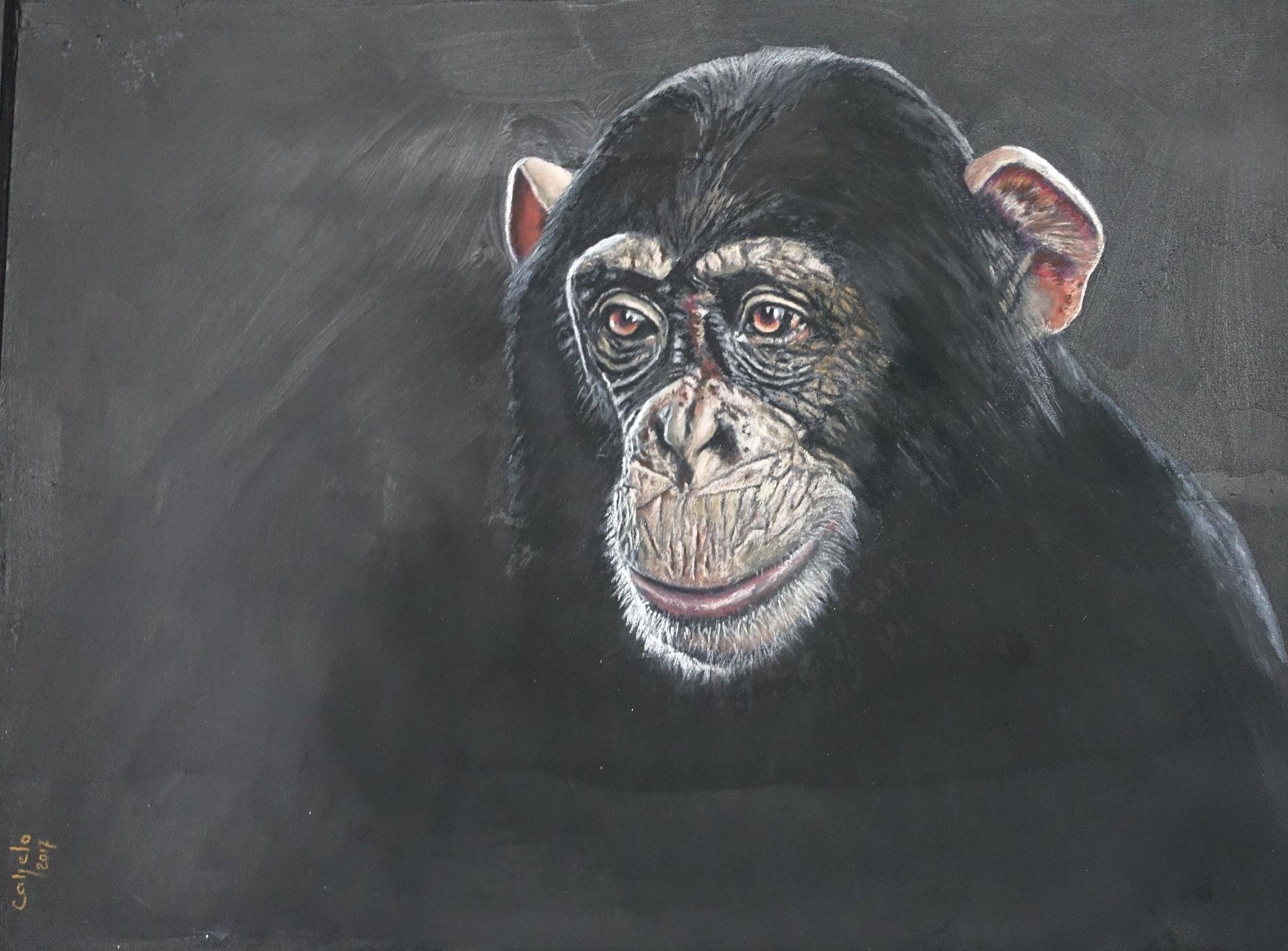 60x80 - Chimpanzé