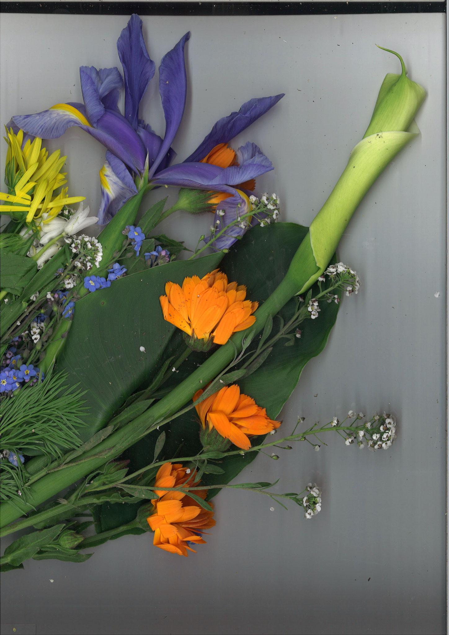 Quelques fleurs... scannées... en soutien... aux