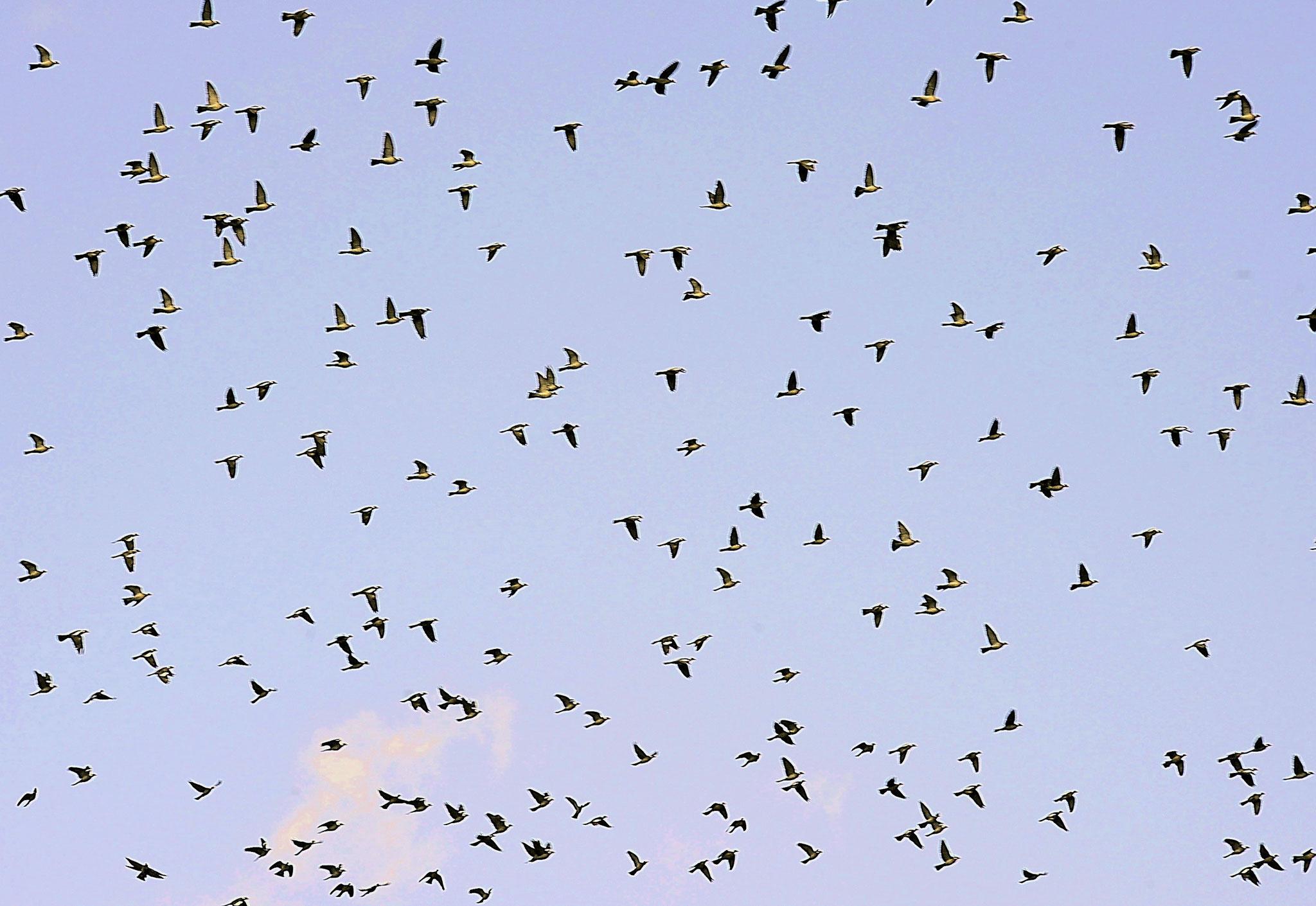 """"""" il y a eu des vols d'oiseaux ,des courants d'air , des migraines qui ont décidé du sort du monde """"   Ernest Renan  (Photo F. Fourcade)"""