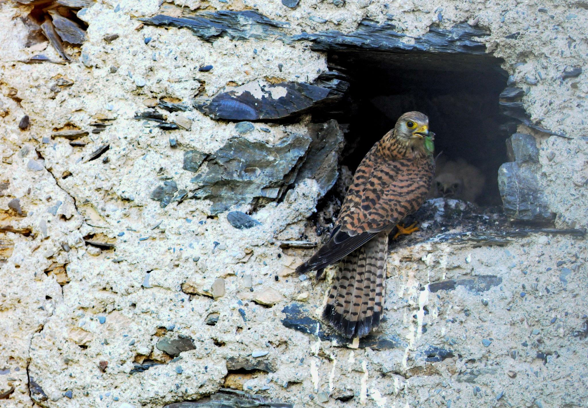 """je ne suis ni l'aile droite ,ni l'aile gauche je suis l'oiseau ""      proverbe indien (Photo F. Fourcade)"