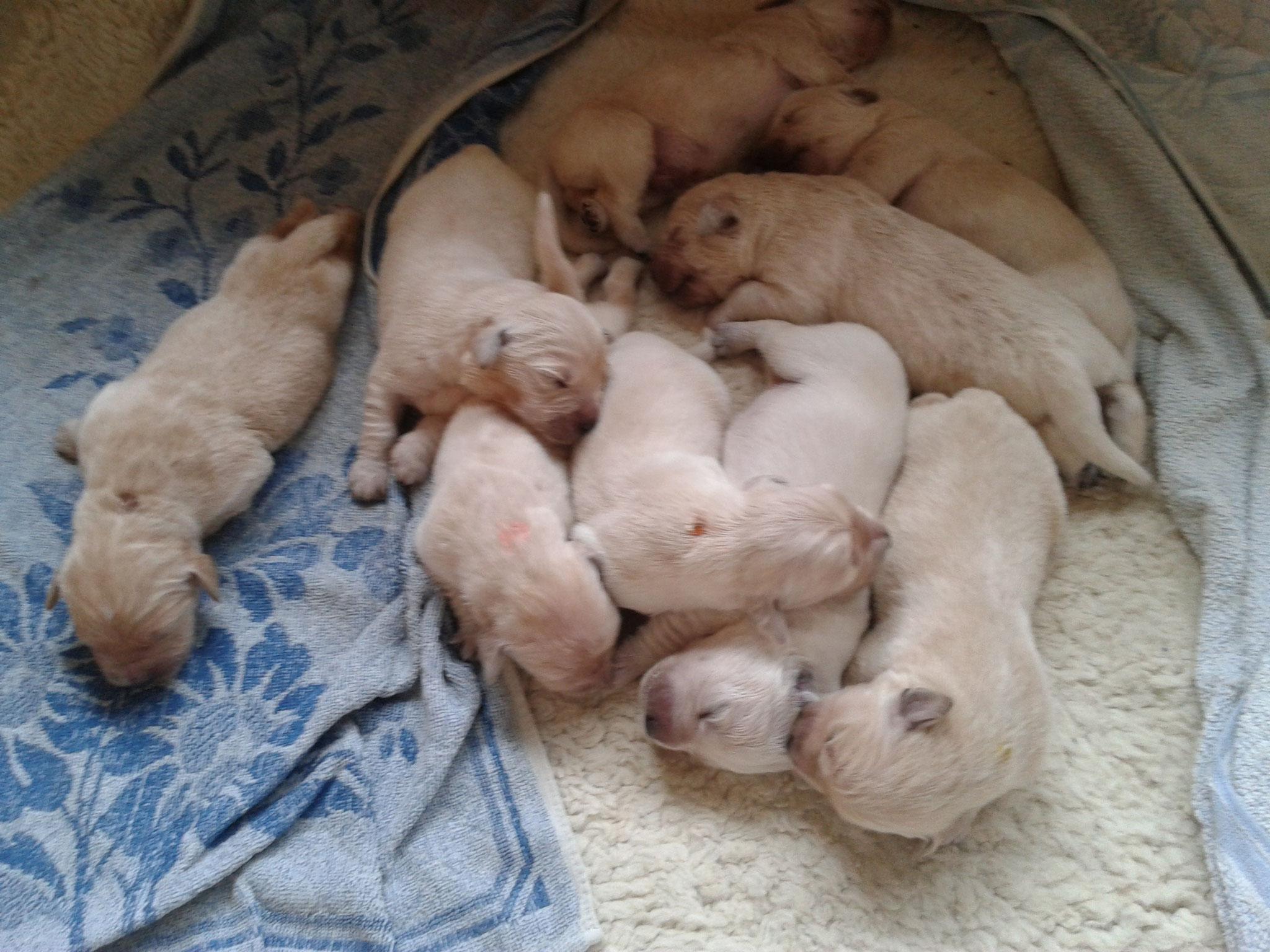 Die ganze schlafende Bande (1 Woche alt; Xani ist die mit dem orangenen Punkt)