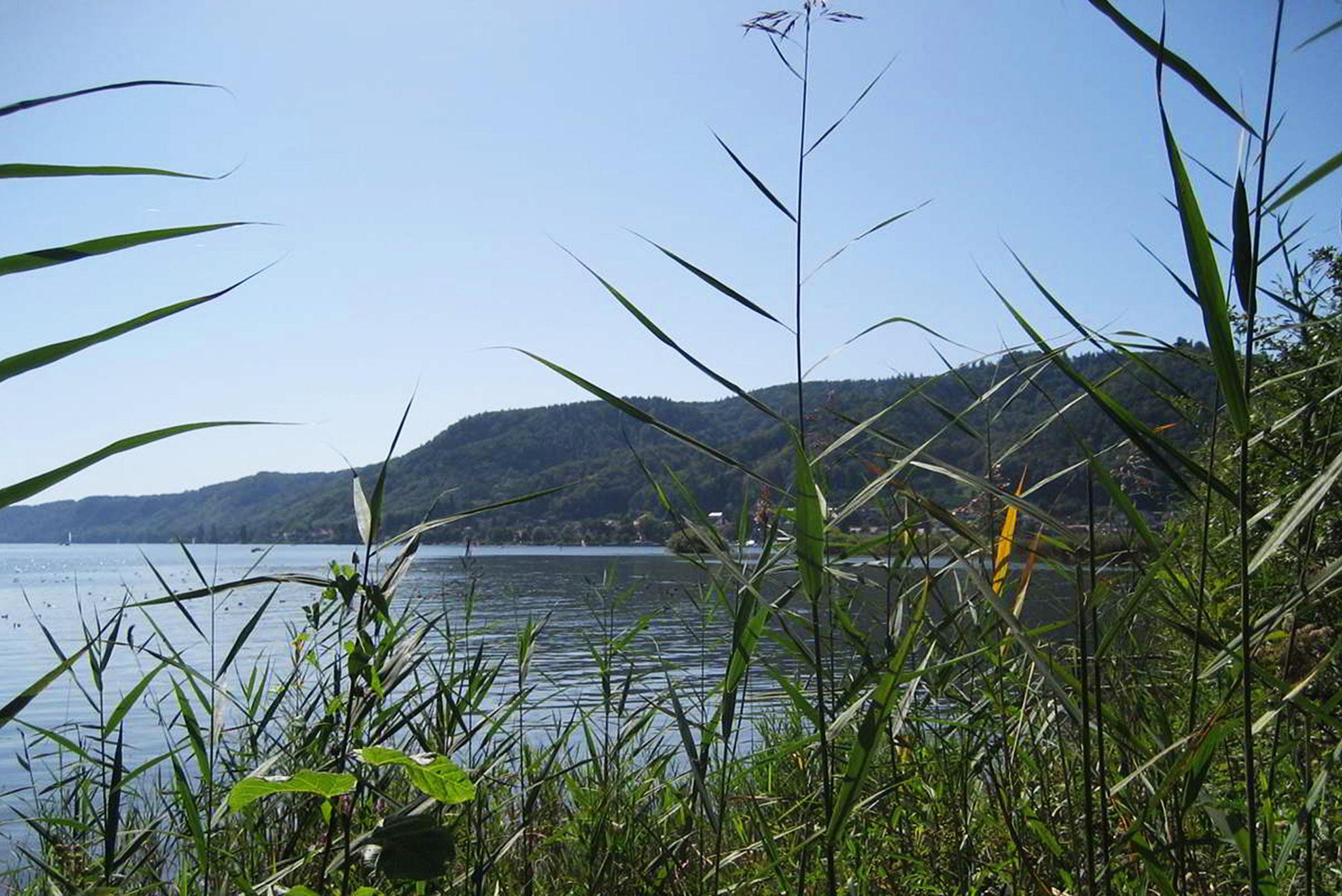 Blick vom Naturschutzgebiet Ried auf Bodman