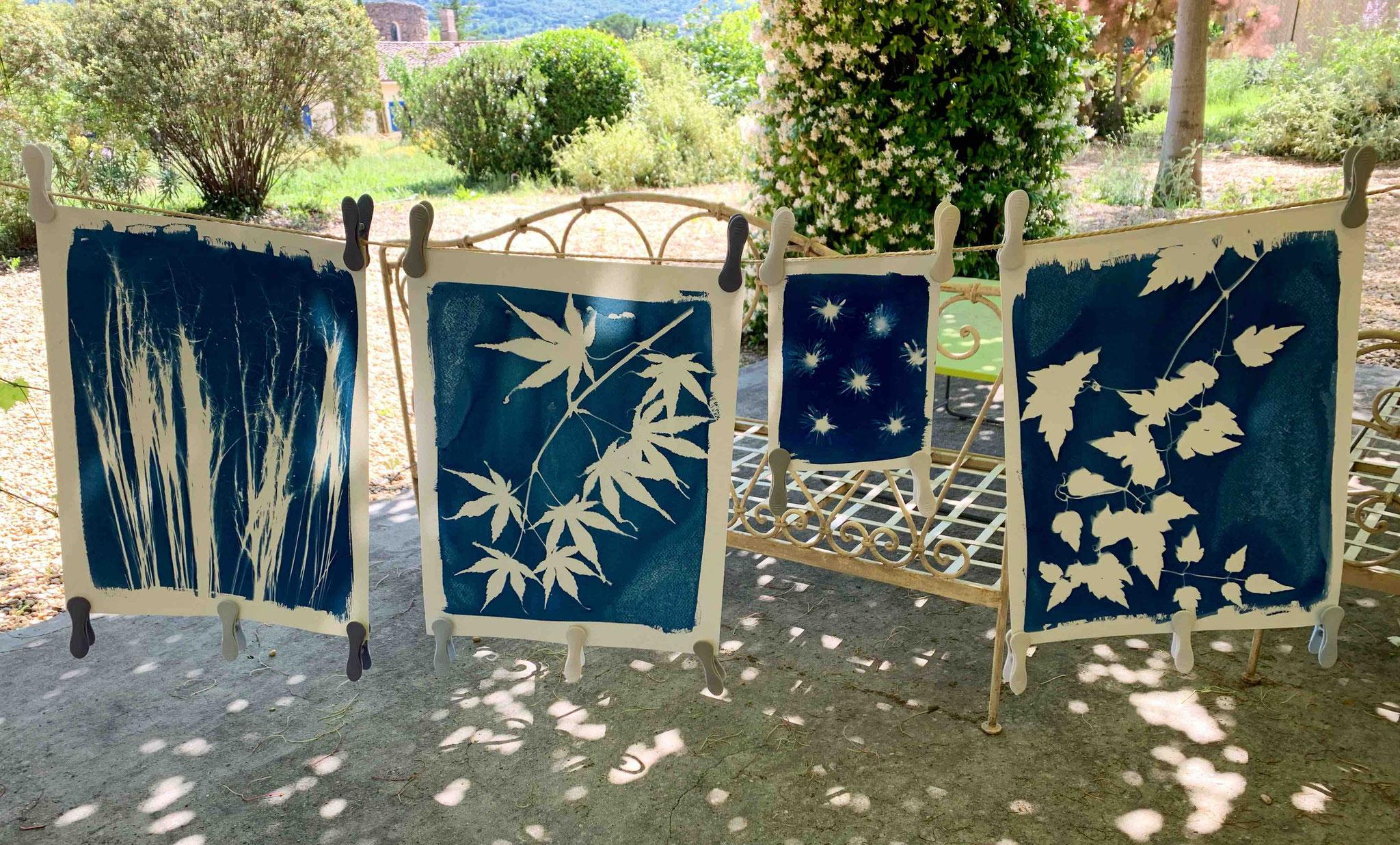 Séchage des cyanotypes. Brigitte Morel