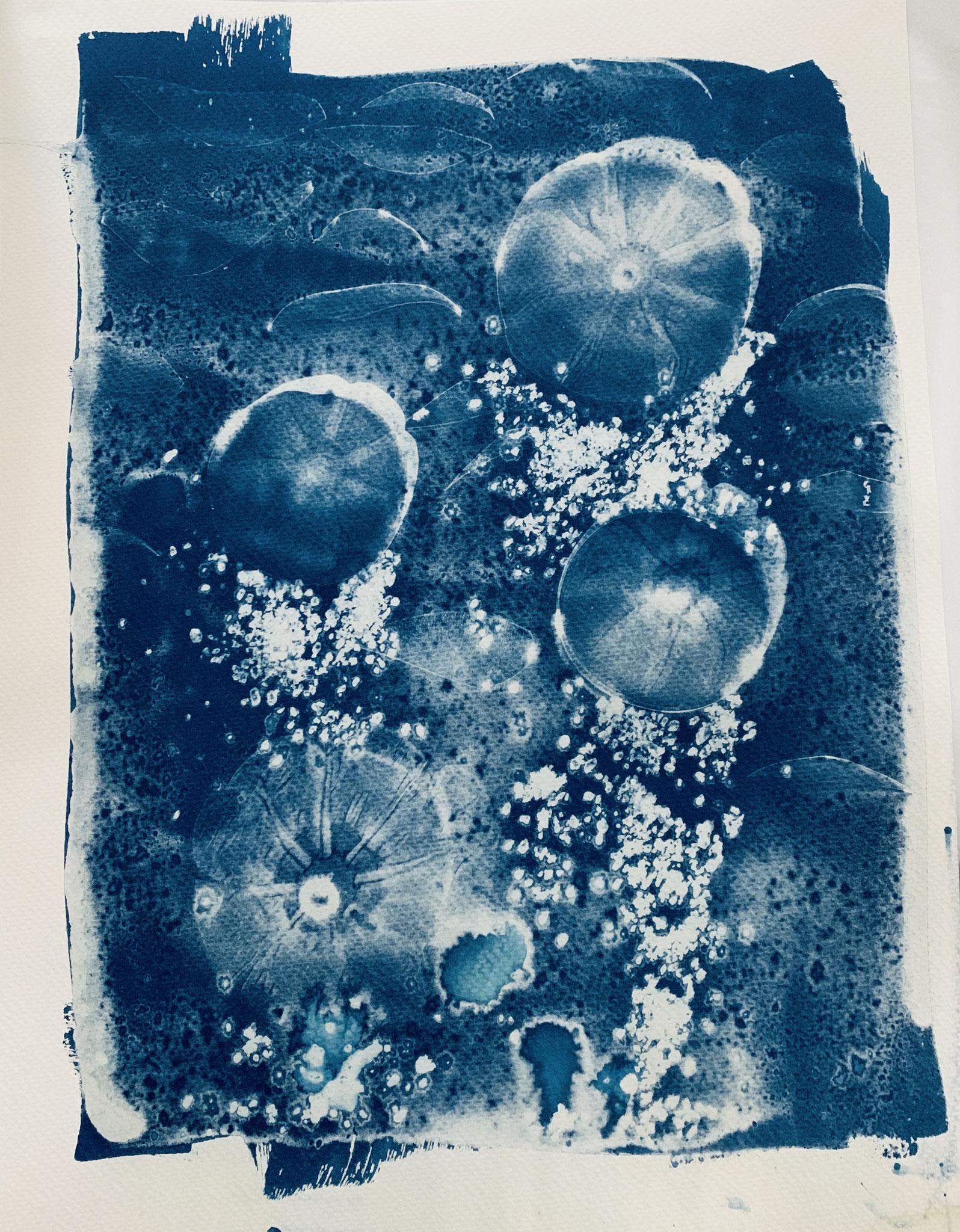 Cyanotype unique Le bal des méduses