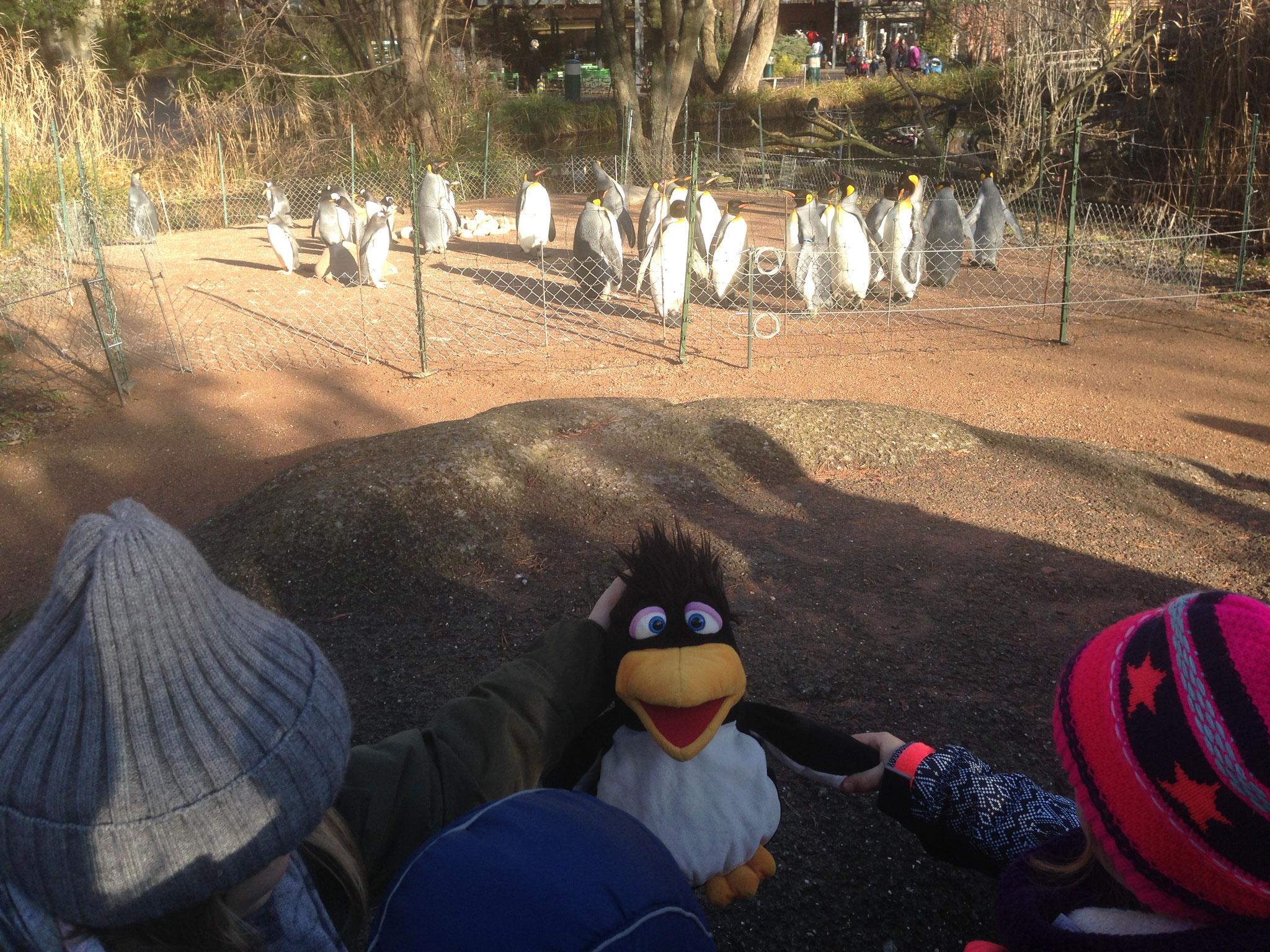 Herr Thomas Müller bei den Pinguinen