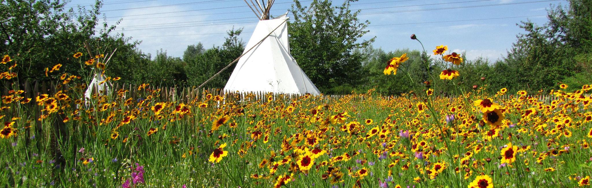 Blick auf das Indianer-Tipi von der Blumenwiese