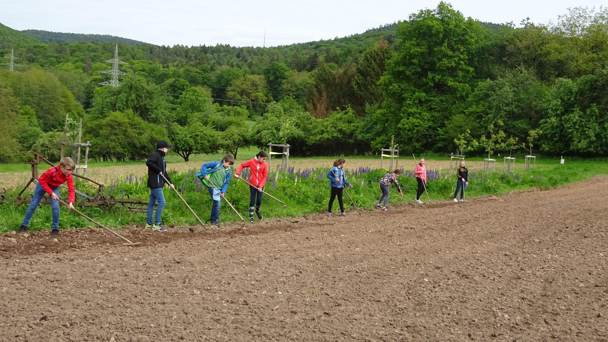 Die Gruppe legt eine Blühfläche an