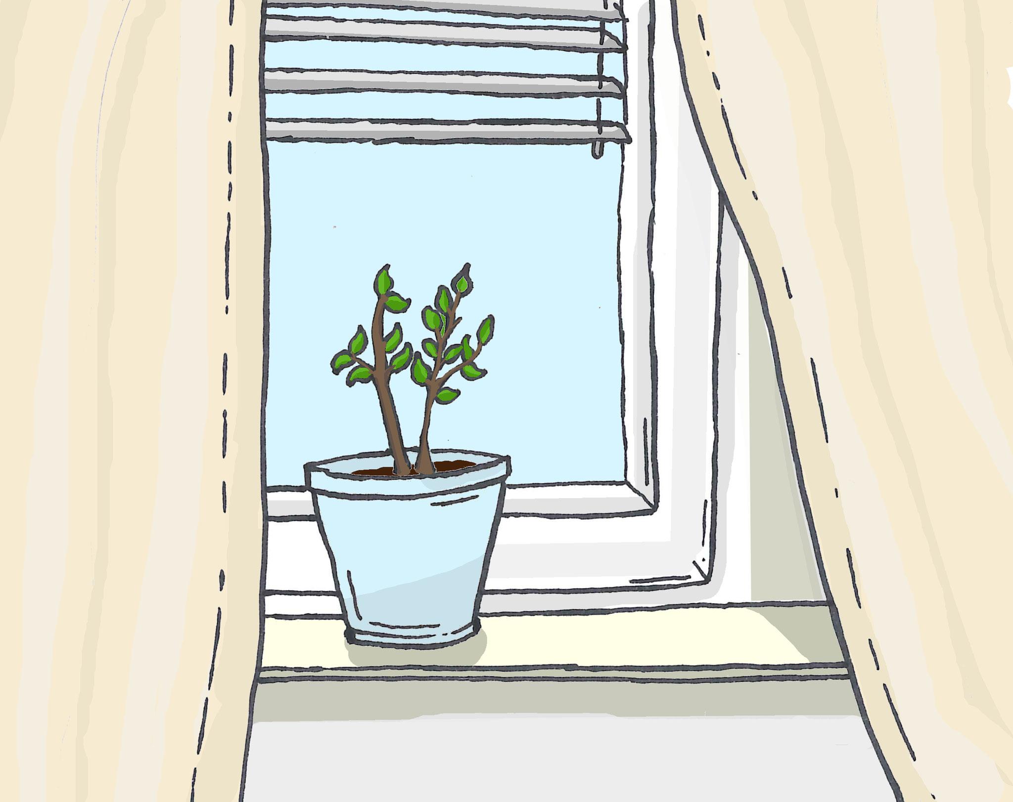 10. Mal zuziehen: Beschattete Fenster kühlen nachhaltiger und ökologischer als Klimaanlagen. Ventilatoren haben keinen kühlenden Effekt. In der Anschaffung sind Markisen und Rollläden nicht nur  billiger, sondern auch rentabler.