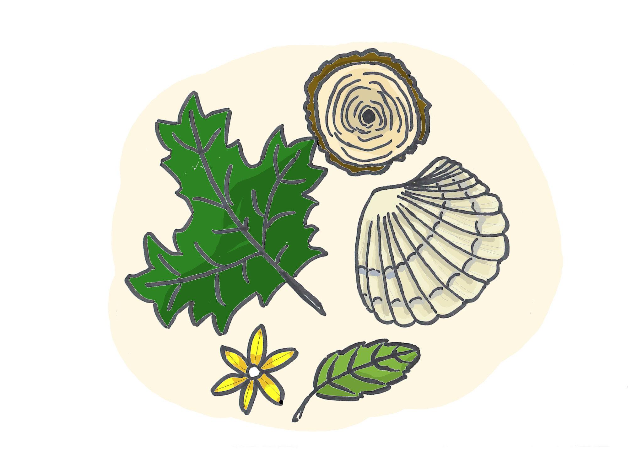 3. Naturmaterialien sammeln: Der Kita-Garten, ein Wald oder Park gibt alles her, was es für gutes Spielzeug braucht. Aus Blättern können Bilder, aus Stöcken Figuren, aus Blumen Kränze gemacht werden.