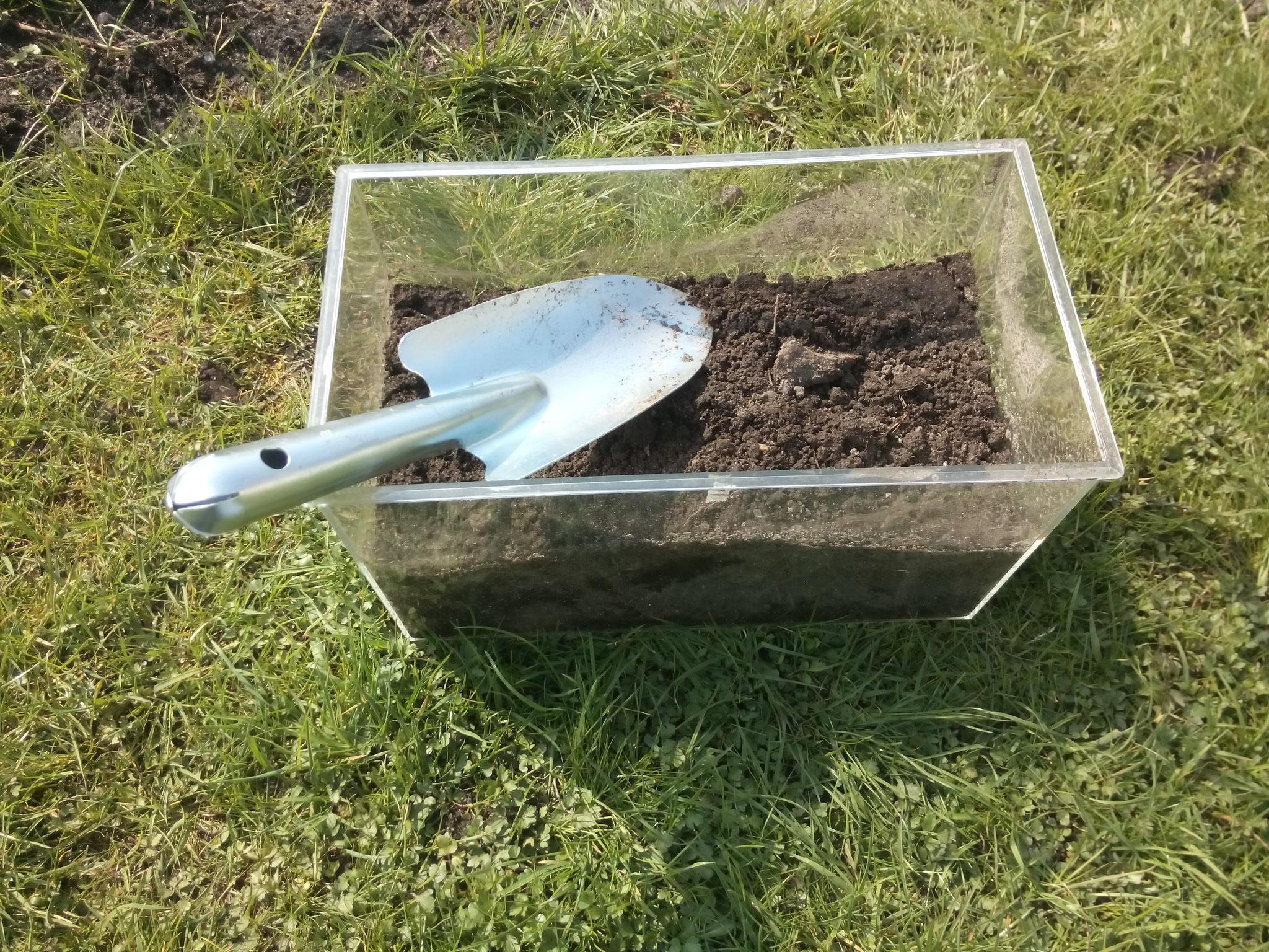 Ein großes Glas oder Aquarium zur Hälfte mit Gartenerde füllen. Keine Baumarkterde nutzen, darin sind keine Mikroorganismen!