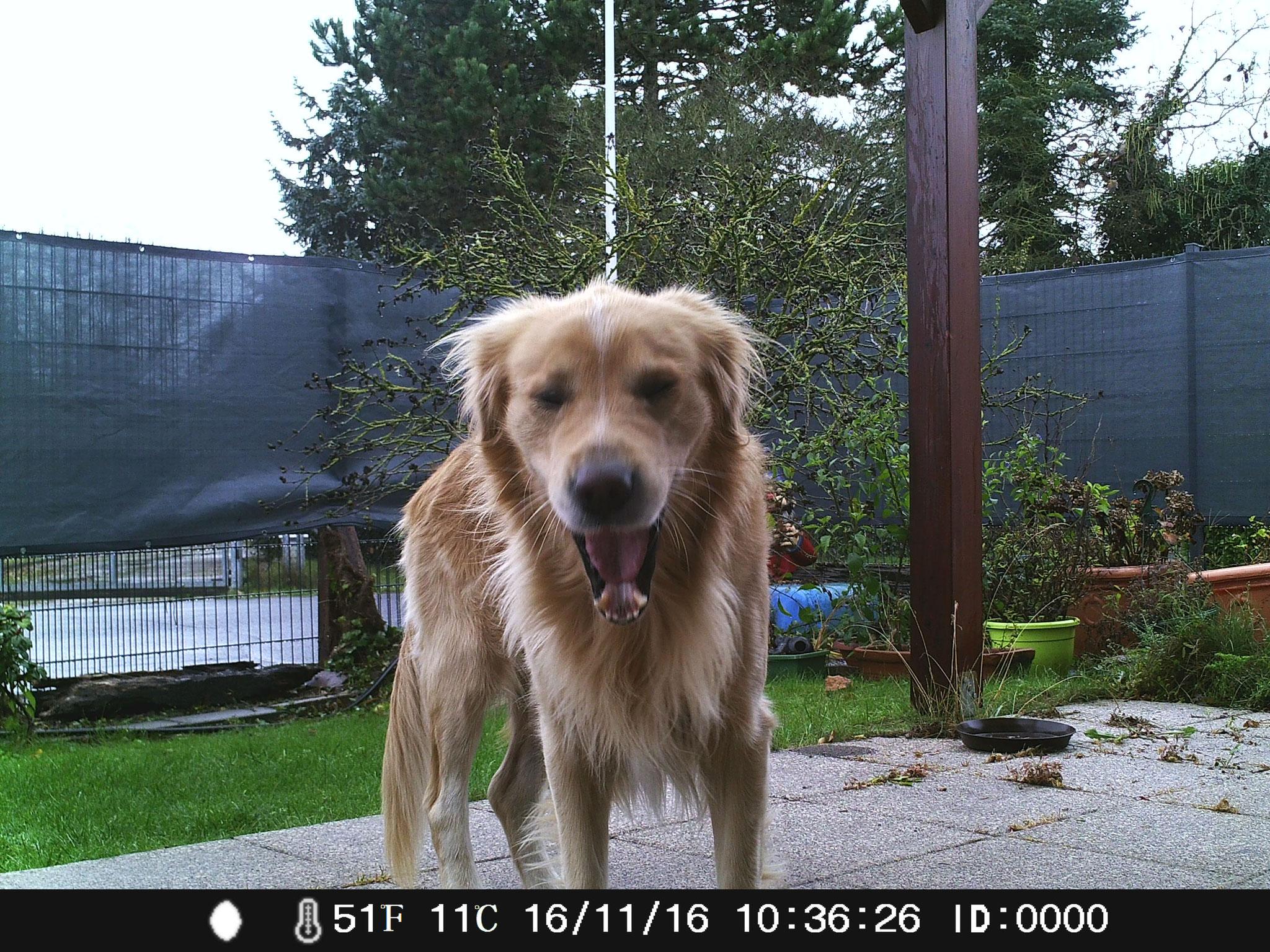 Mein Hund fühlt sich vollkommen unbeobachtet