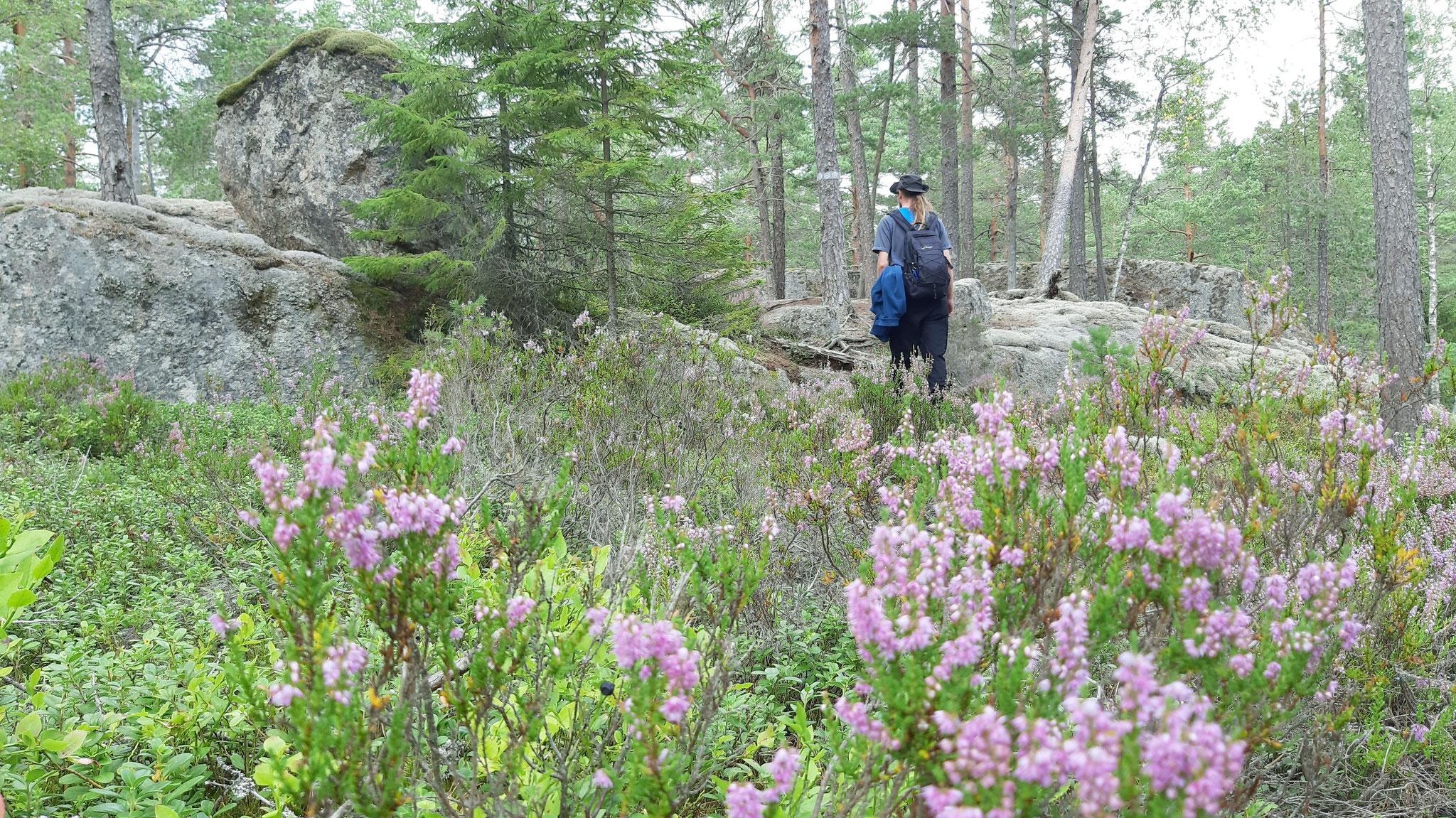 Wanderung durch Moor und Heide