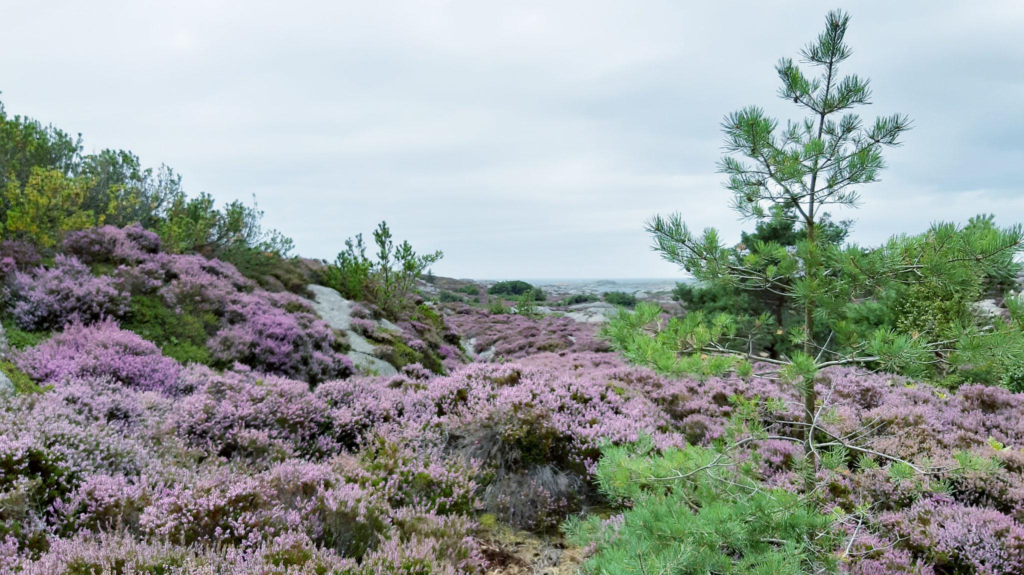 Ein landschaftliches Kleinod an der Nordseeküste