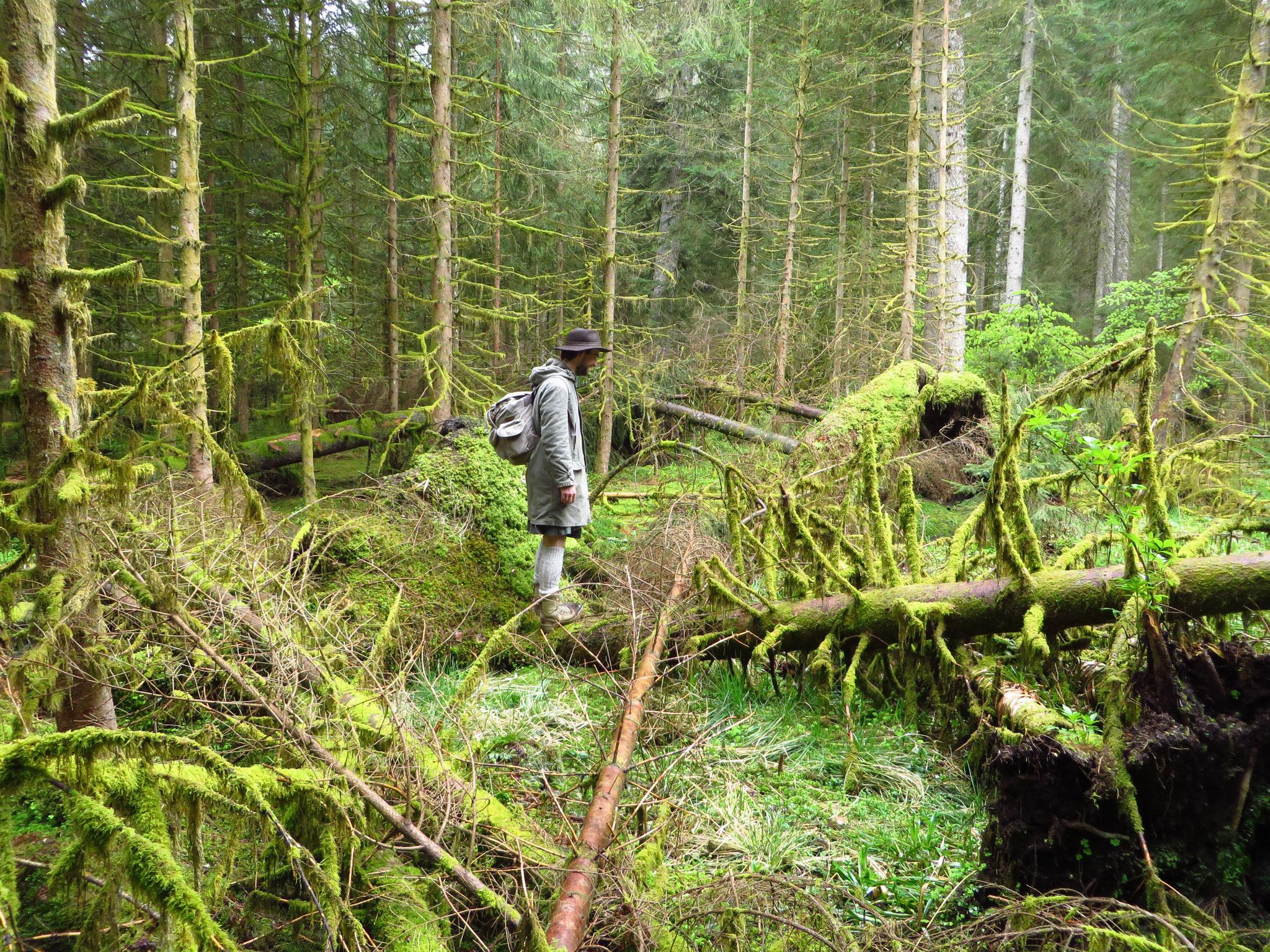 Ein Mann im Wald.