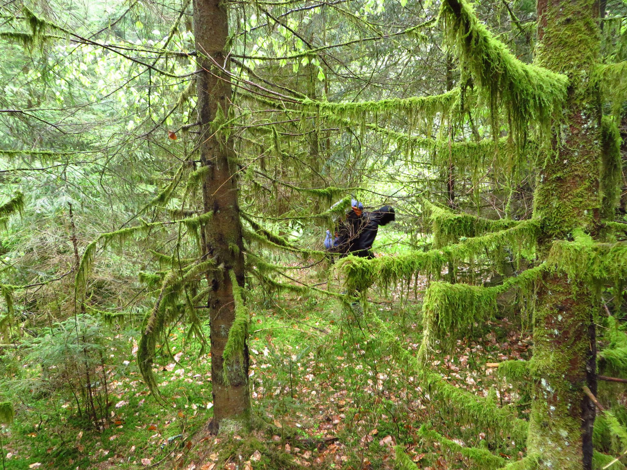 Noch ein Mann im Wald. Im Urwald!
