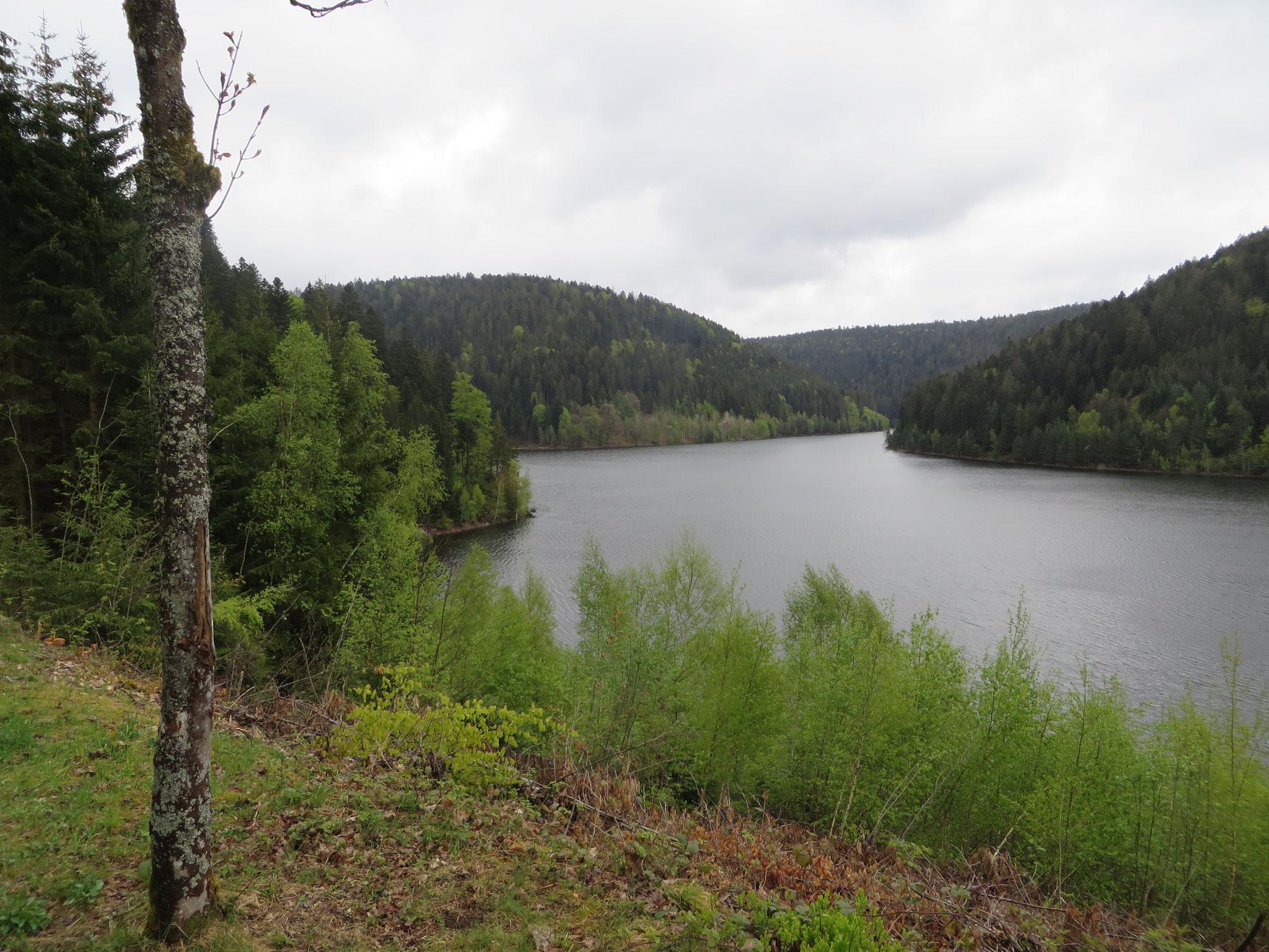 Talsperre Kleine Kinzig (Schwarzwald 2019)